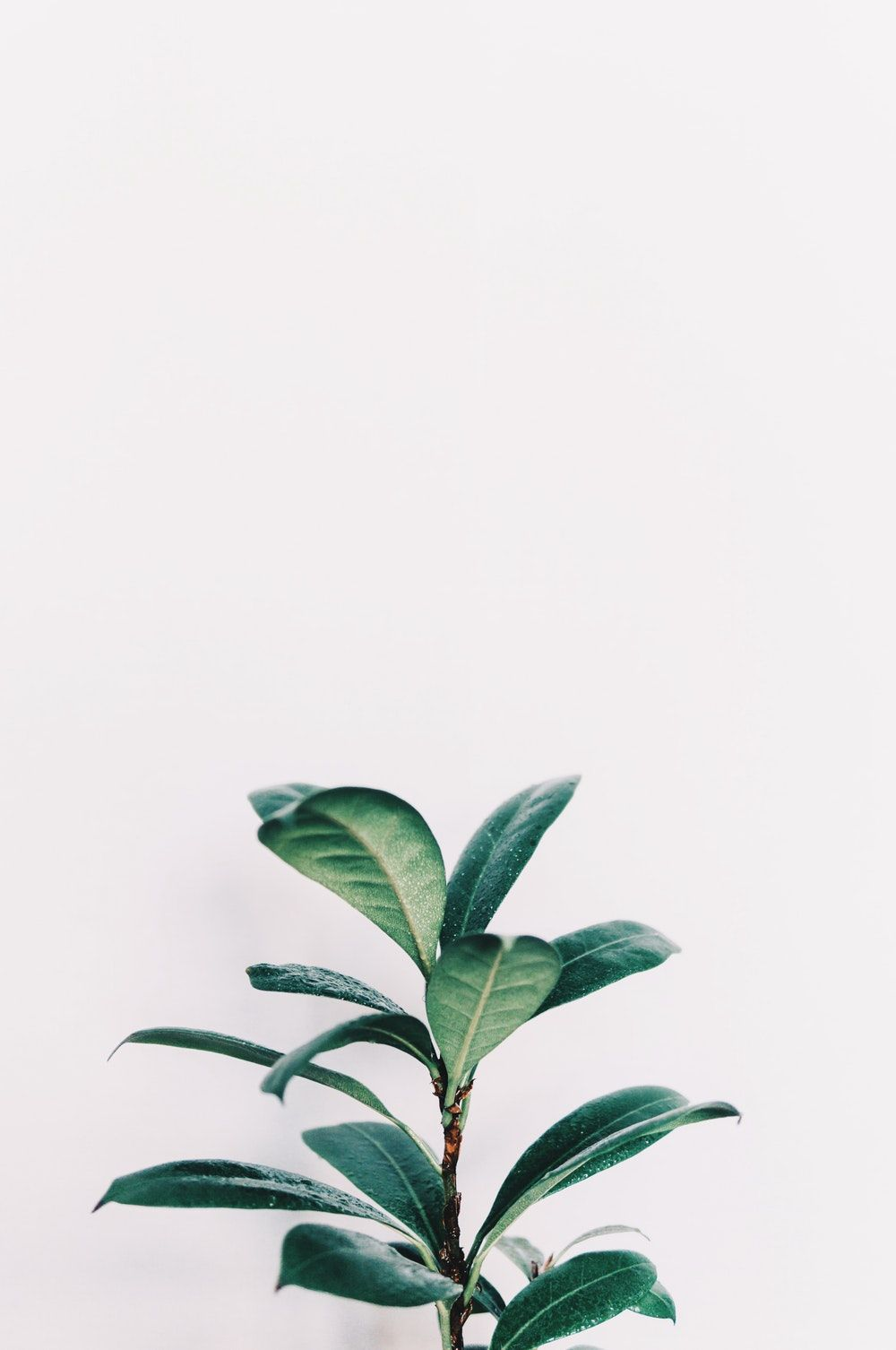 Plant Aesthetic Laptop Wallpapers