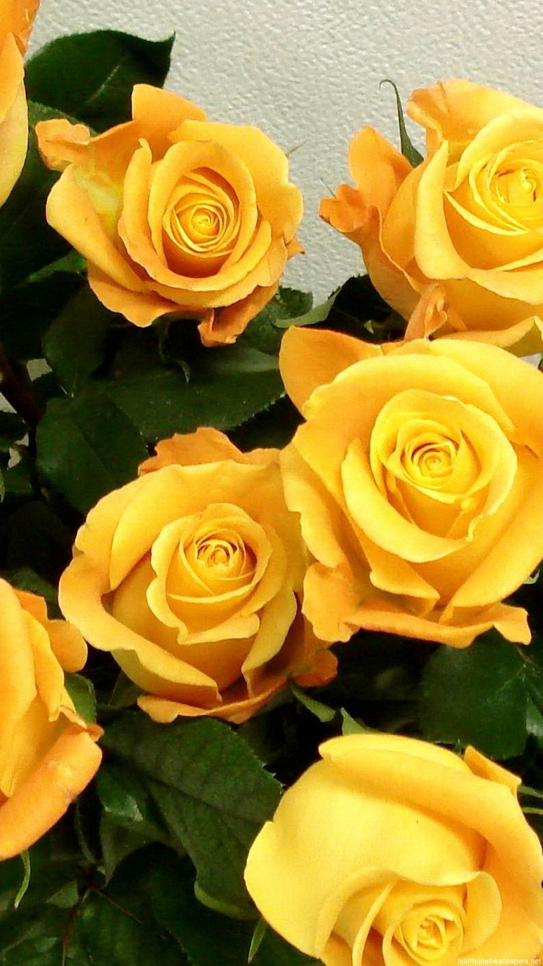 White And Yellow Flowers Wallpapers Wallpaper Cave