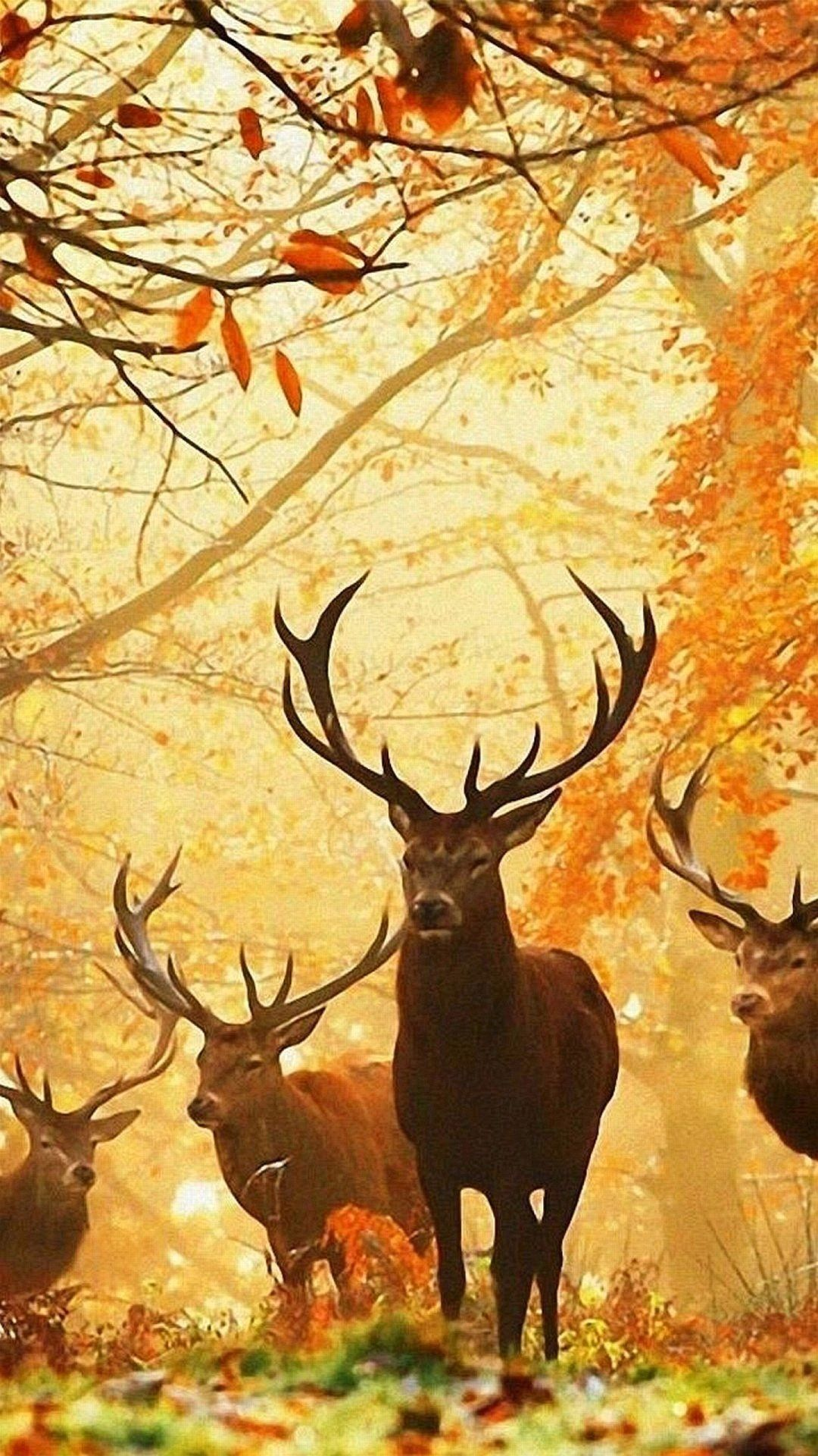 Hunting iPhone Wallpapers - Wallpaper Cave