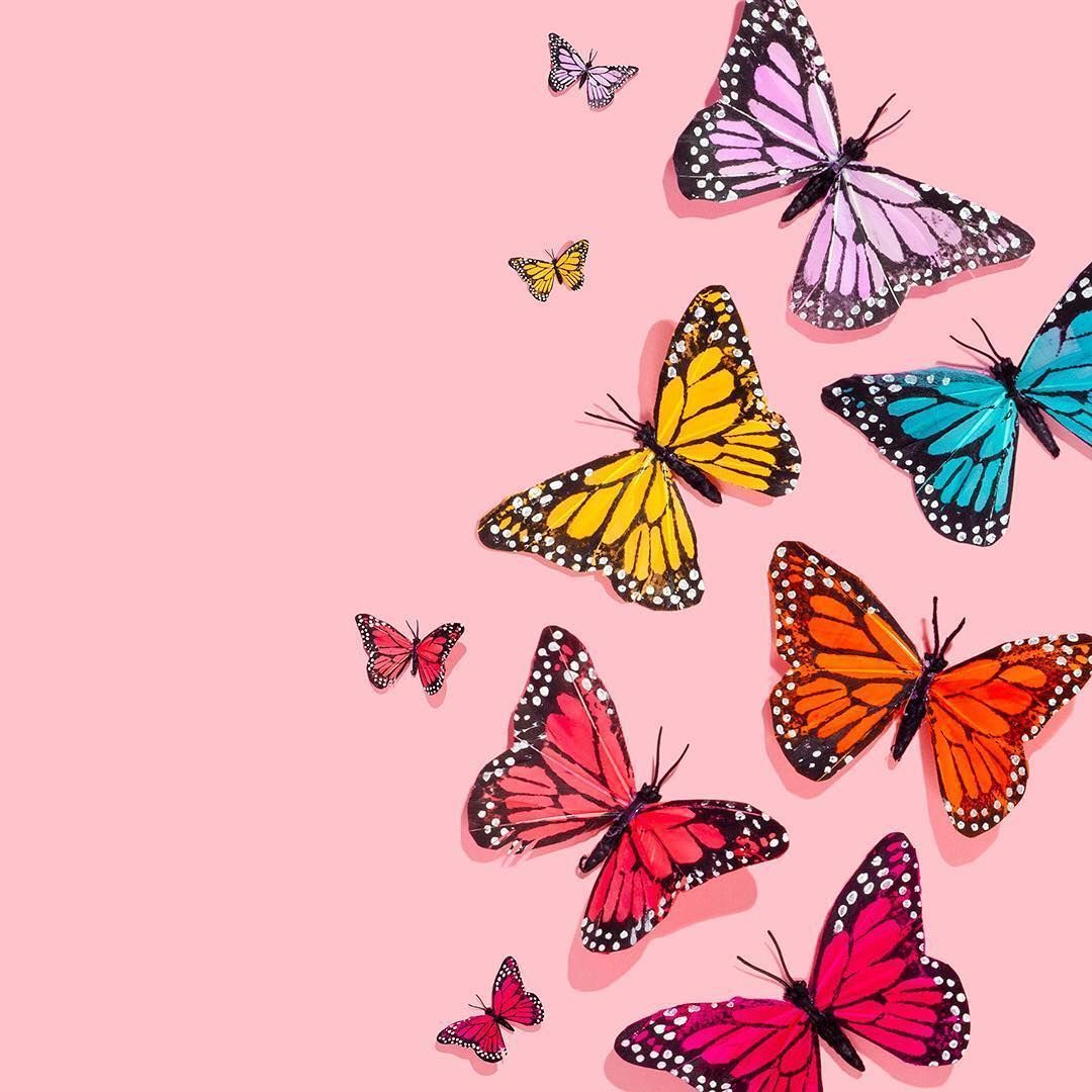Vsco Butterfly Aesthetic Cover Wallpapers Wallpaper Cave