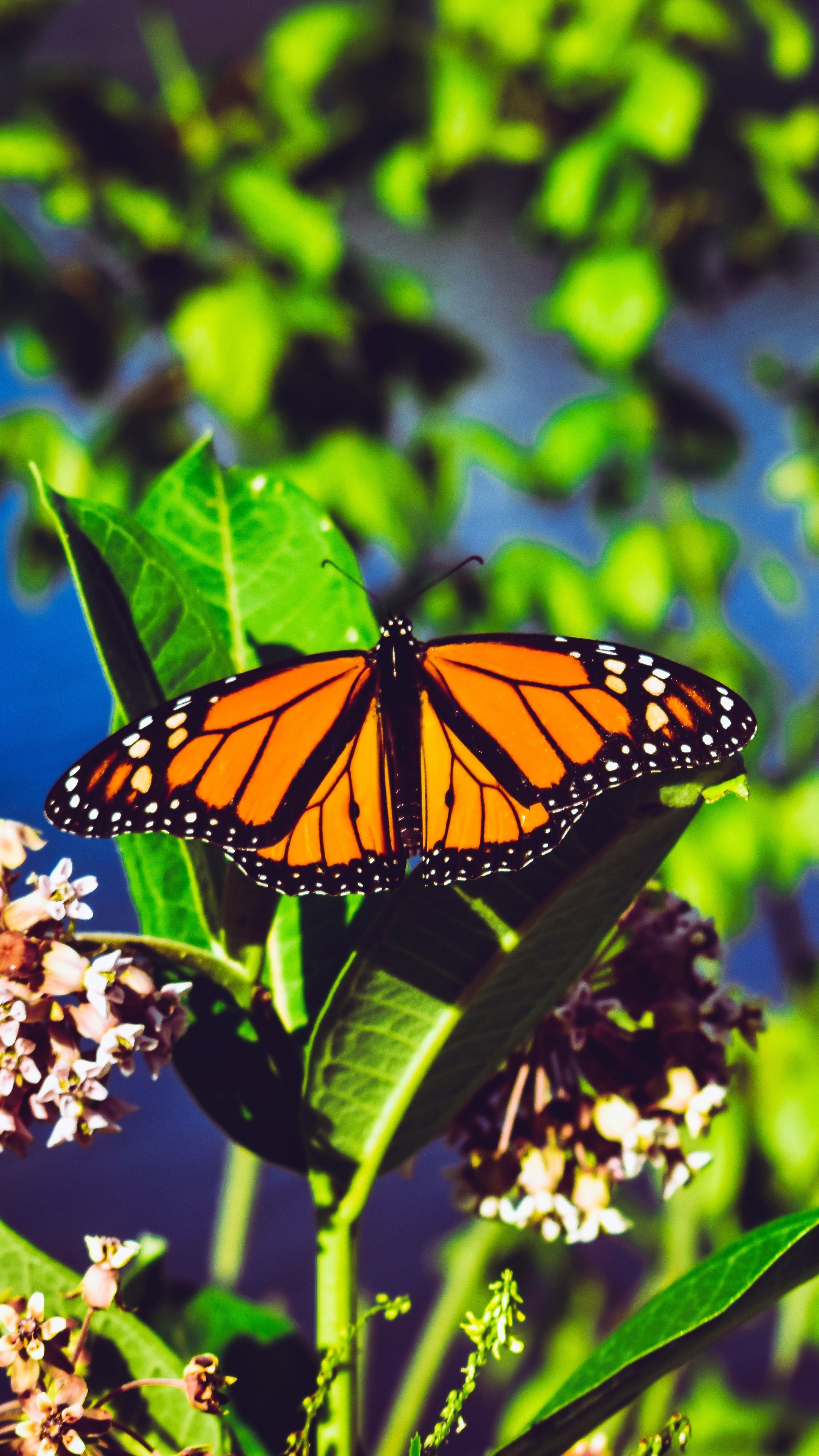monarch butterfly aesthetic wallpapers