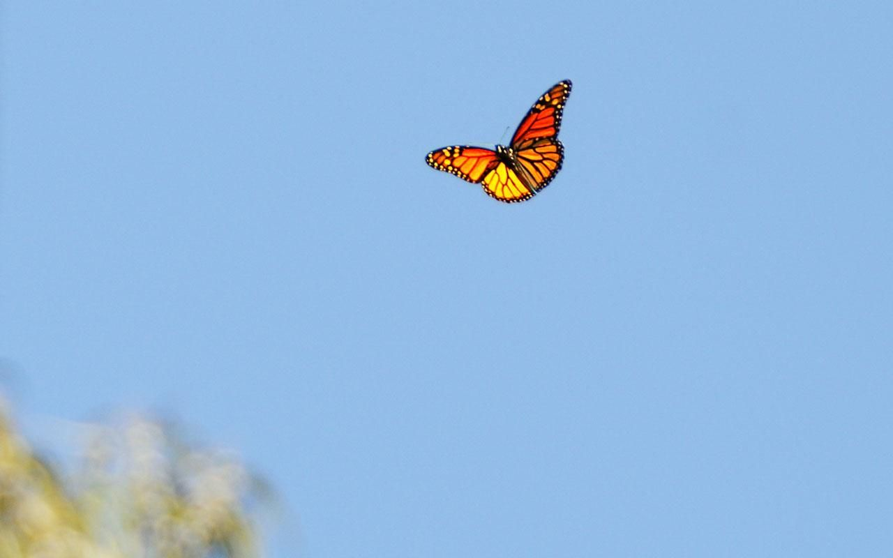 Aesthetic Butterfly Laptop Wallpapers Wallpaper Cave
