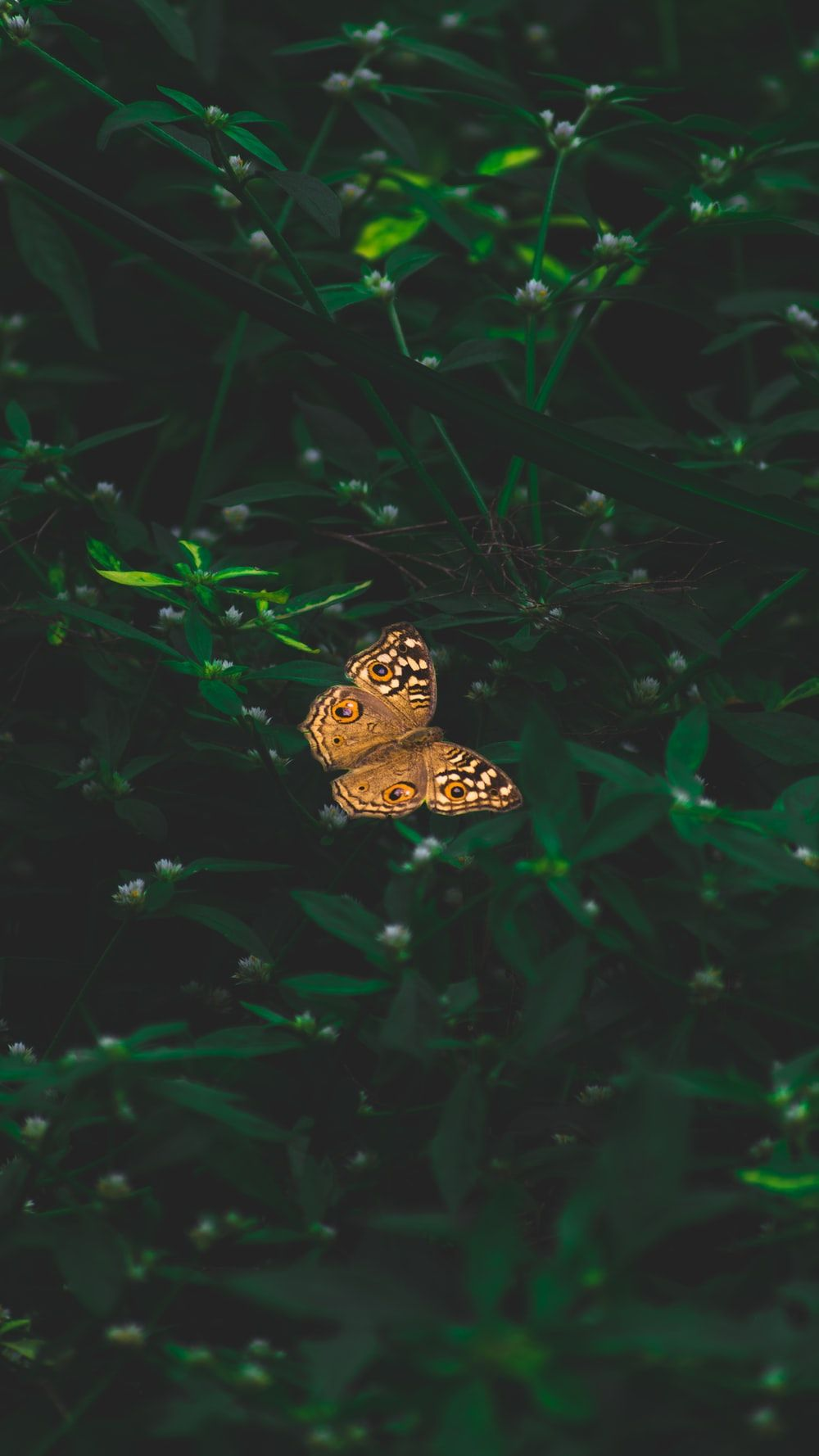 Aesthetic Butterfly Pictures Wallpapers Wallpaper Cave