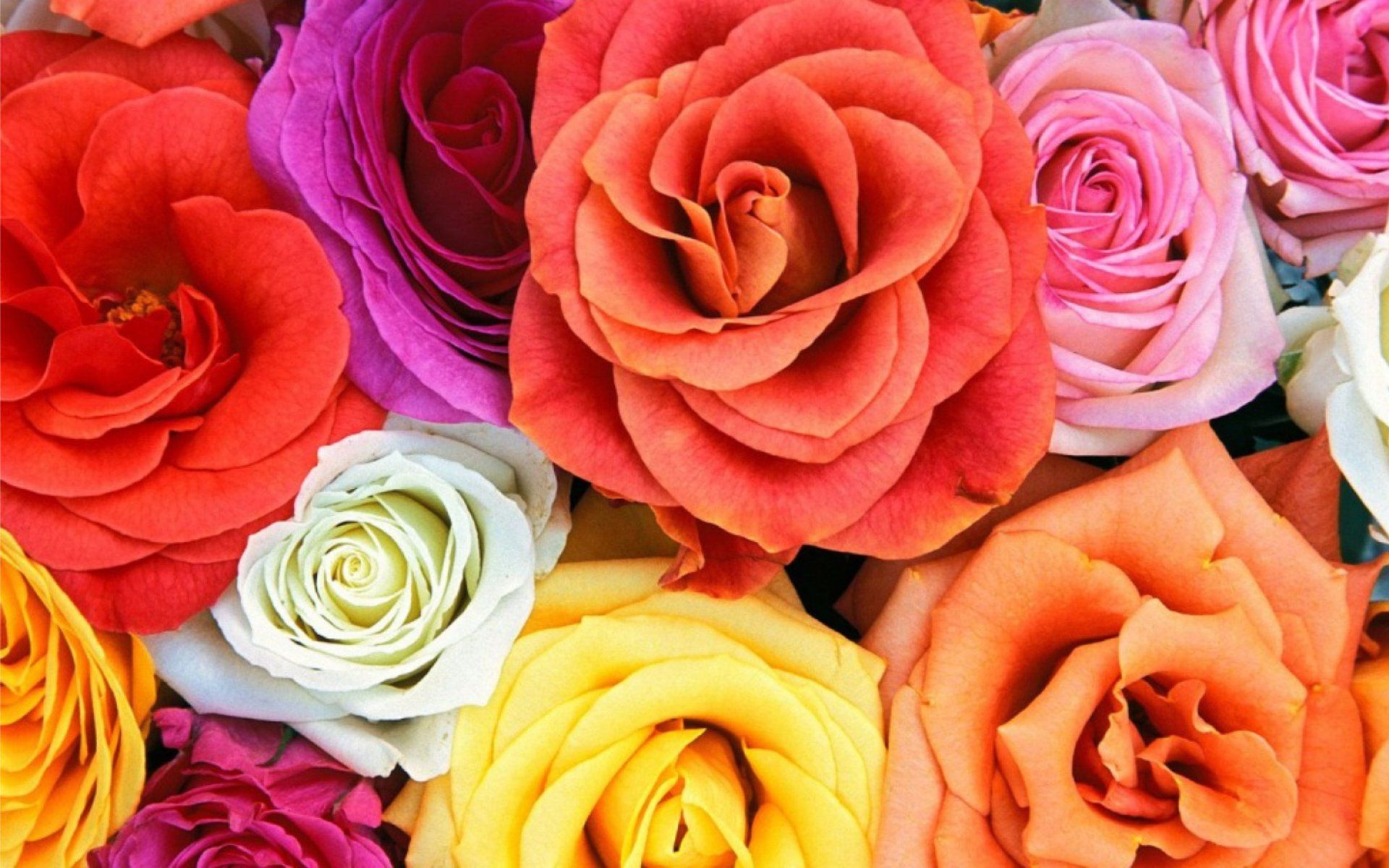 Colorful Roses Wallpapers Wallpaper Cave