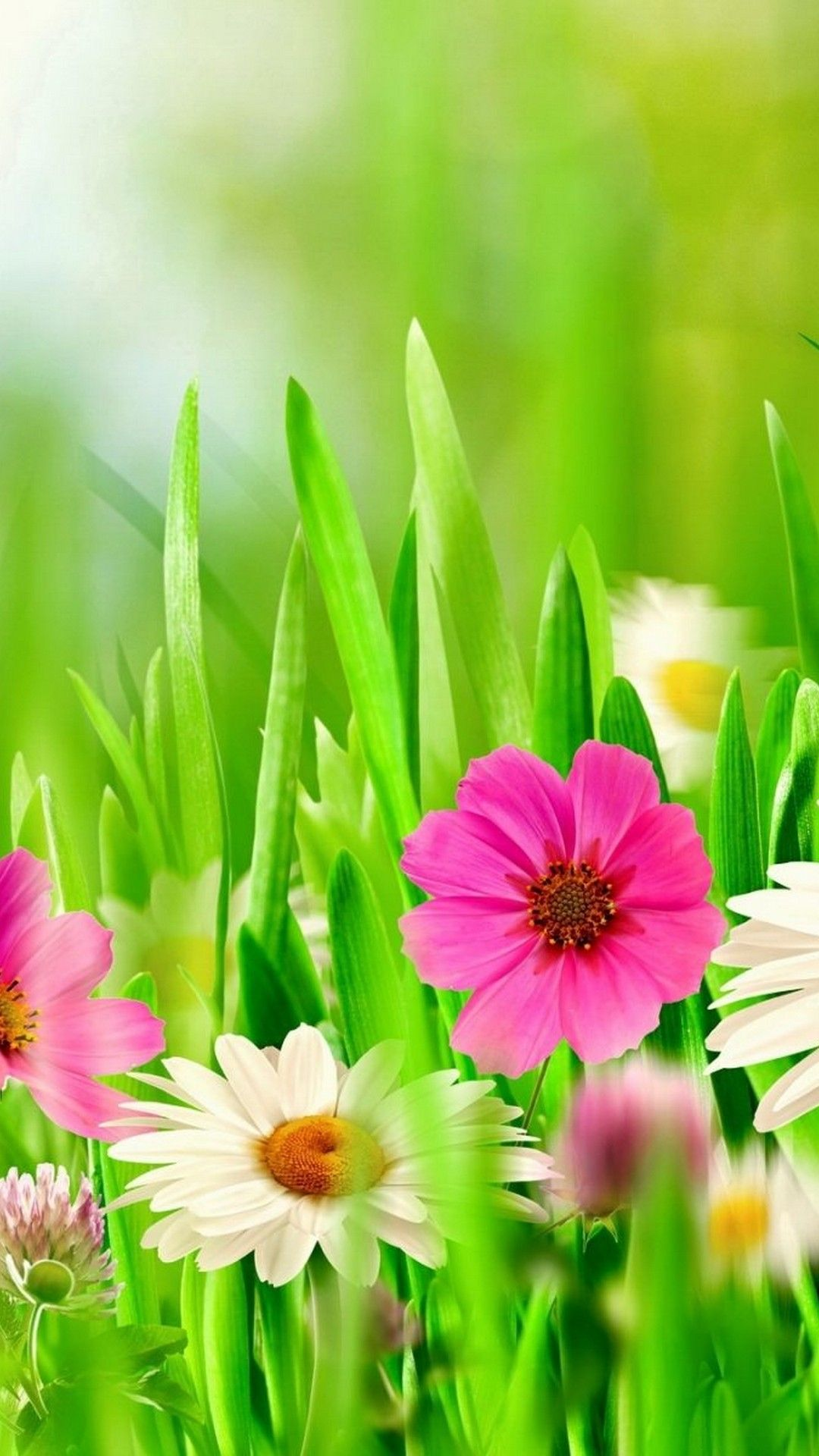 Spring Flowers 2020 Wallpapers - Wallpaper Cave