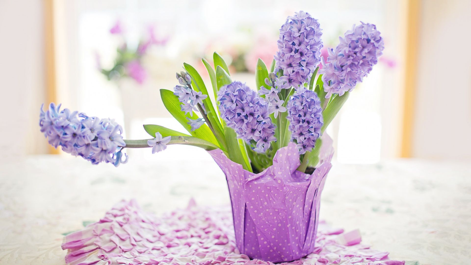 Easter Holiday 2020, Potted Hyacinths, Home... Free Download