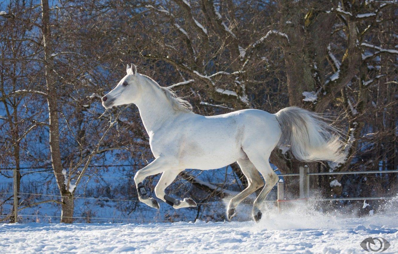 Horses Winter Corral Wallpapers - Wallpaper Cave