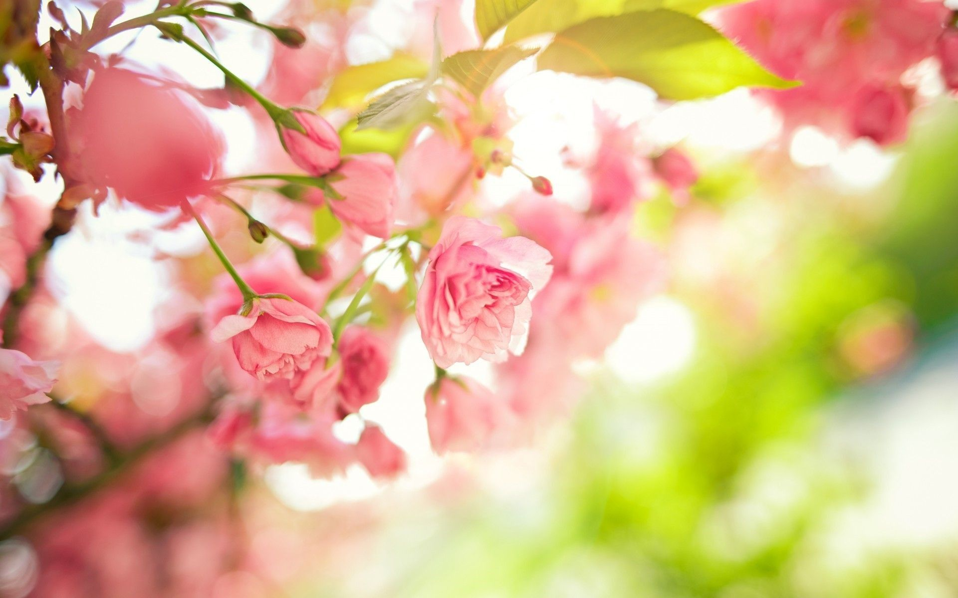 Pretty Spring Flowers Wallpapers