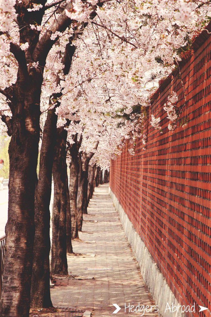 Кореец в Исламе | Часть 14 - II