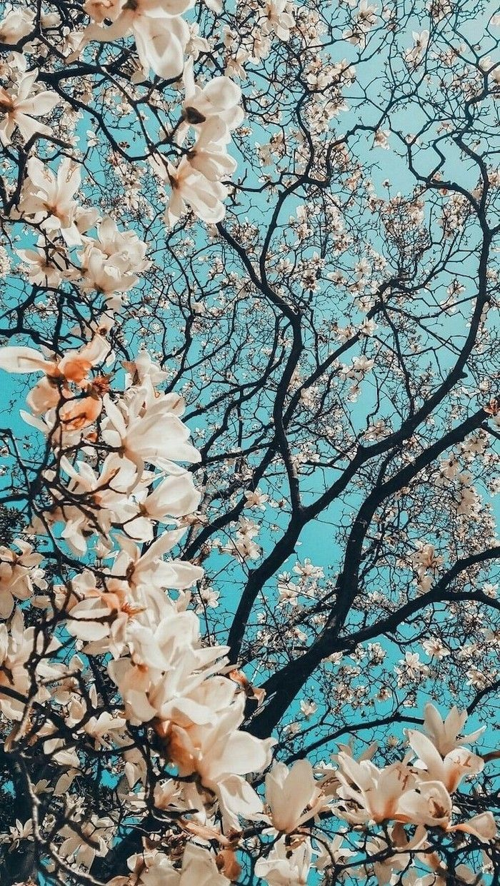 ▷ 1001 + spring wallpapers image for your phone and desktop