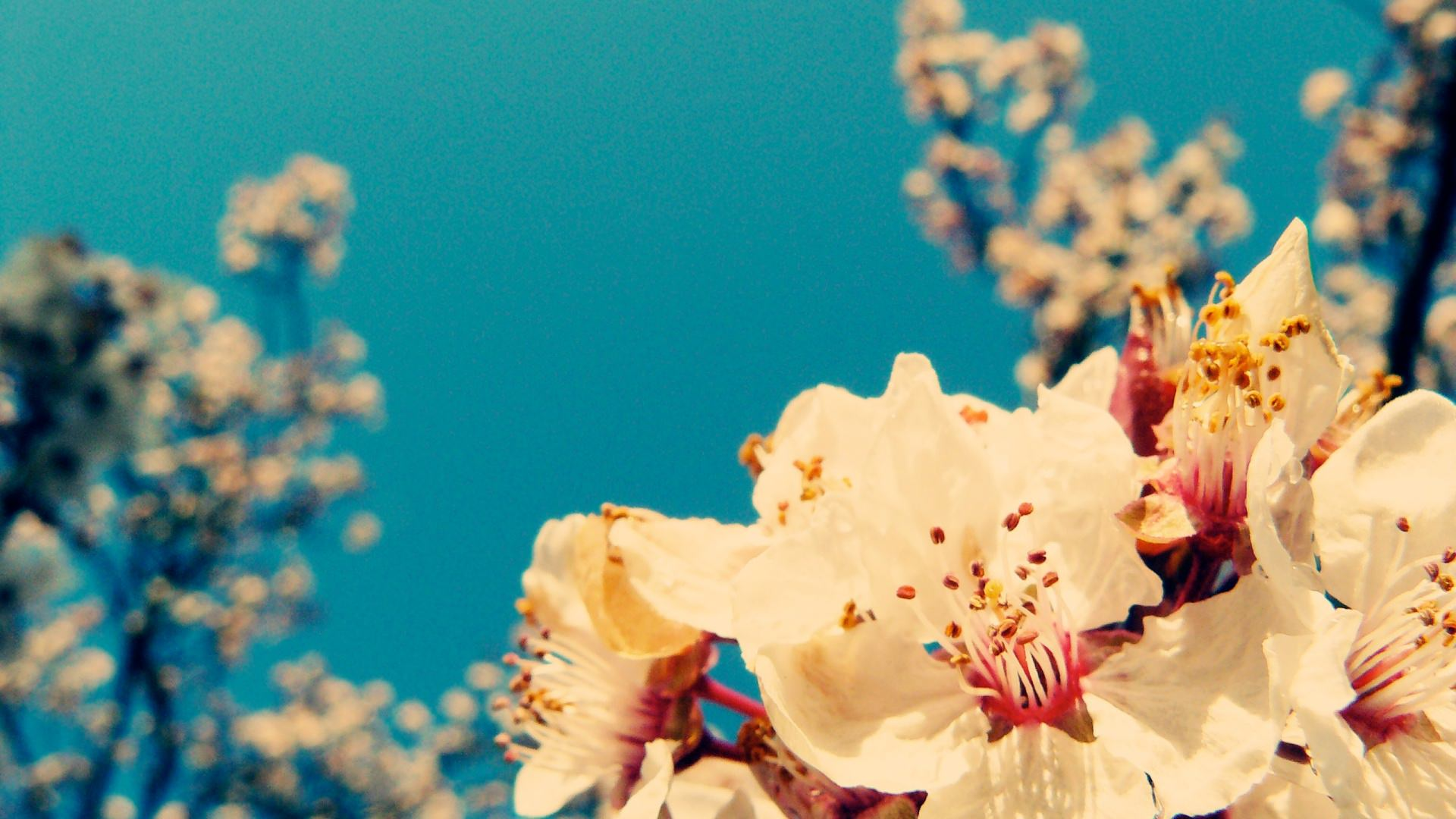 Aesthetic Spring Flowers Pc Wallpapers Wallpaper Cave