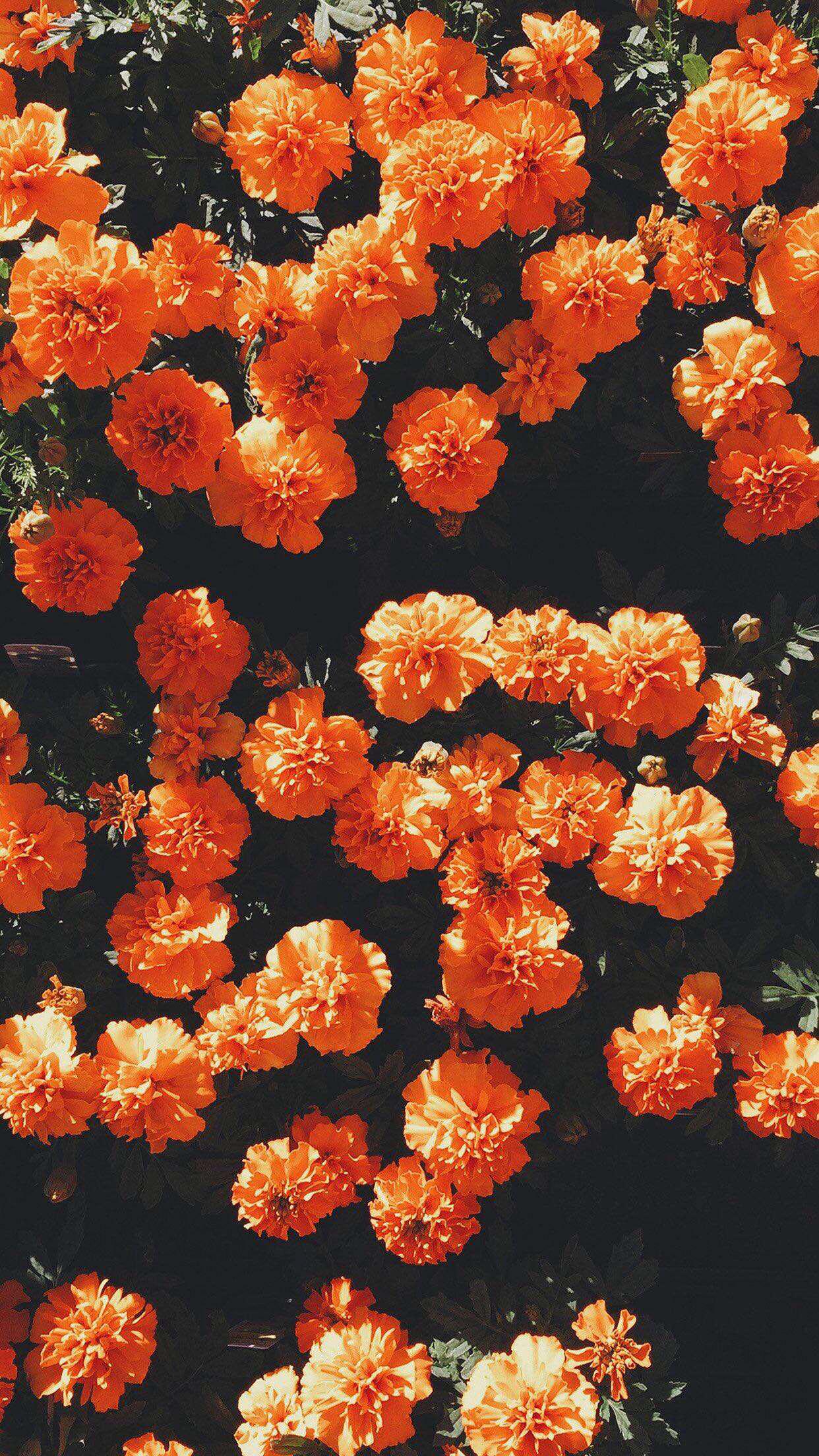 Aesthetic Orange Hd Wallpapers Wallpaper Cave