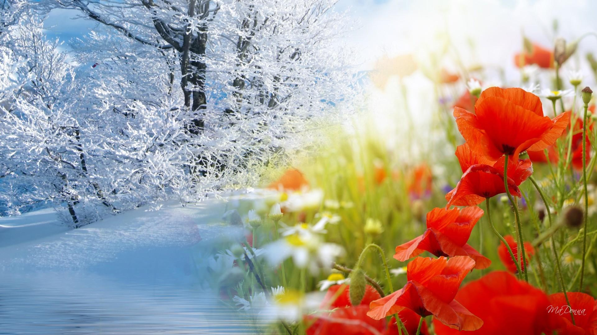 Winter To Spring Wallpapers Wallpaper Cave