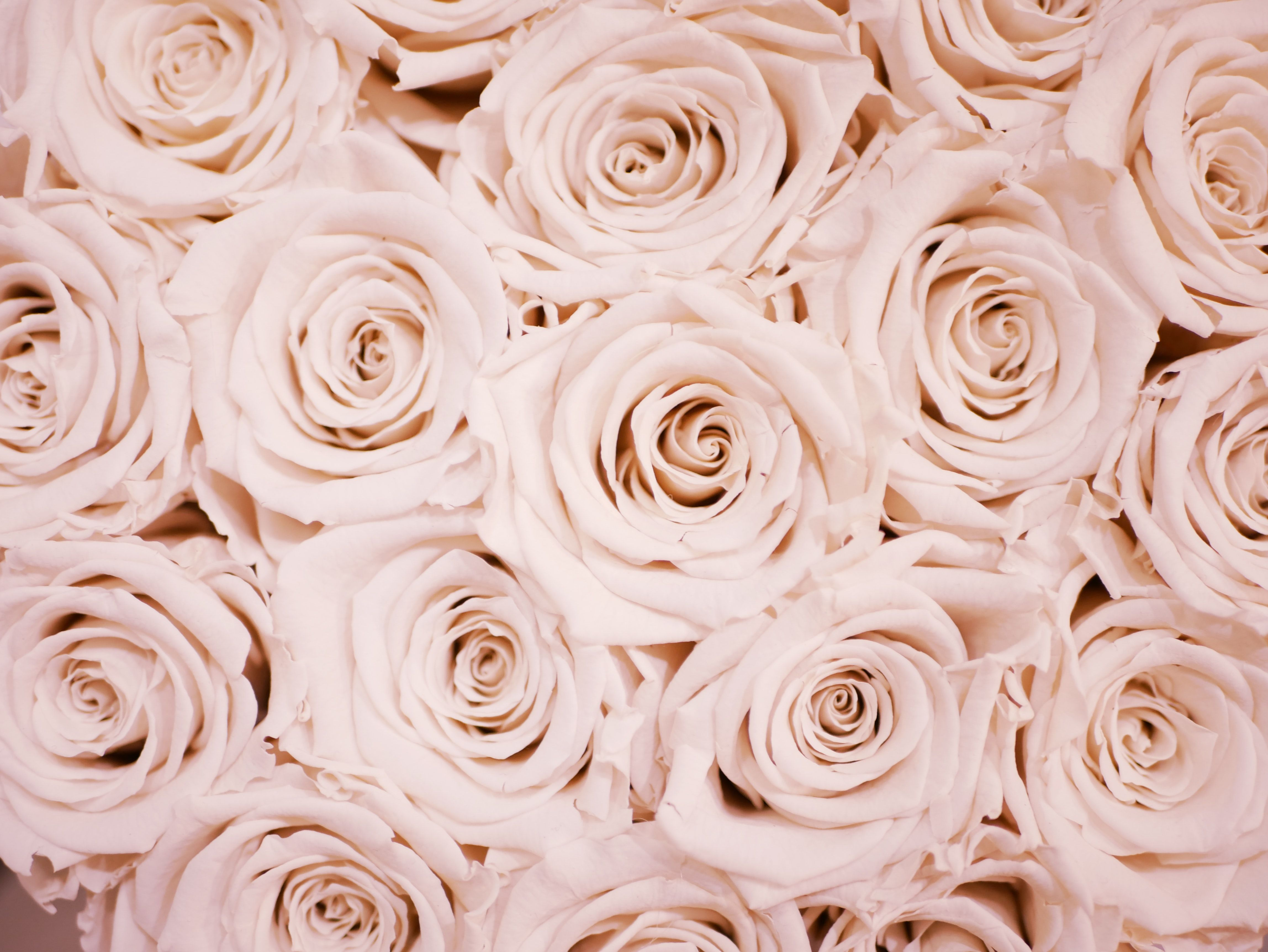 Rose Gold Aesthetic Wallpapers Wallpaper Cave