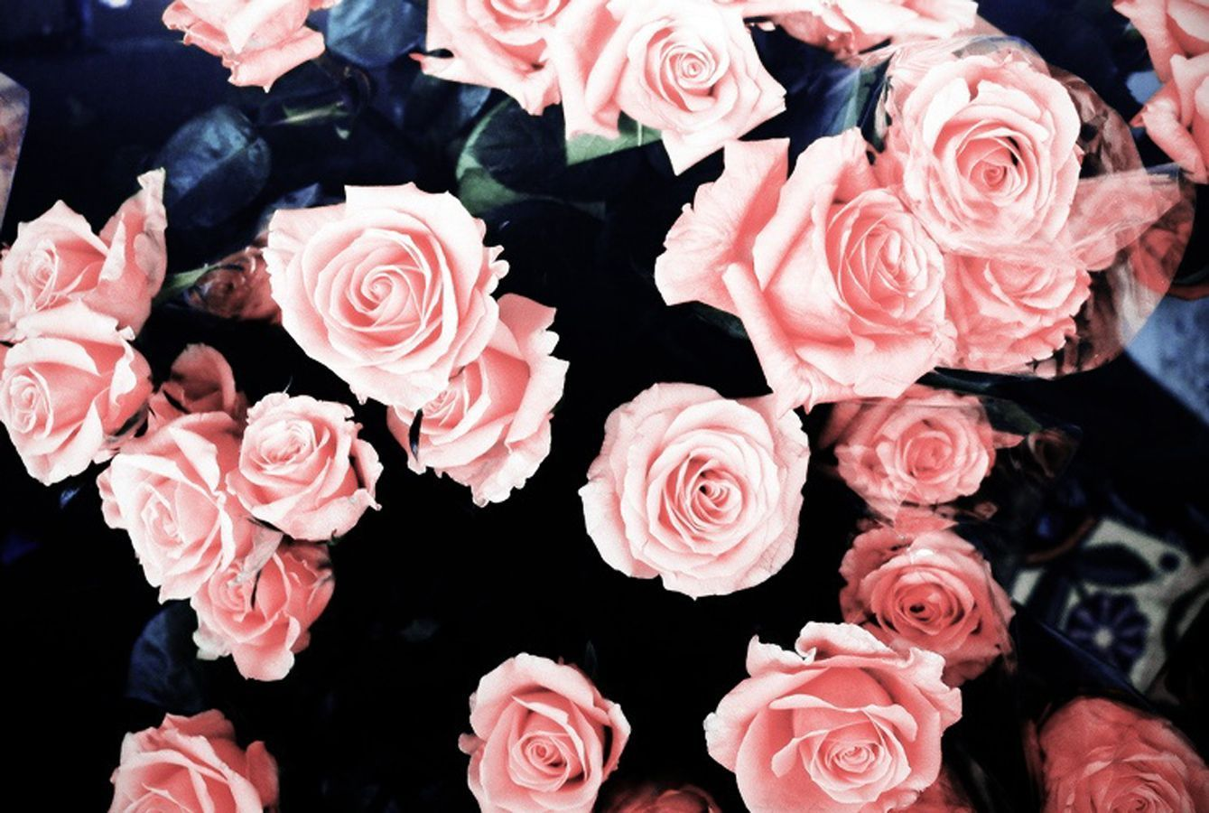 Pink Roses Aesthetic Wallpapers - Wallpaper Cave