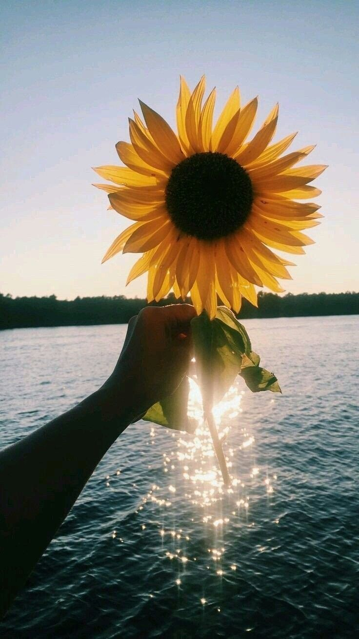 Pin By Sunshine Twister On I Love Sunflowers In 2019
