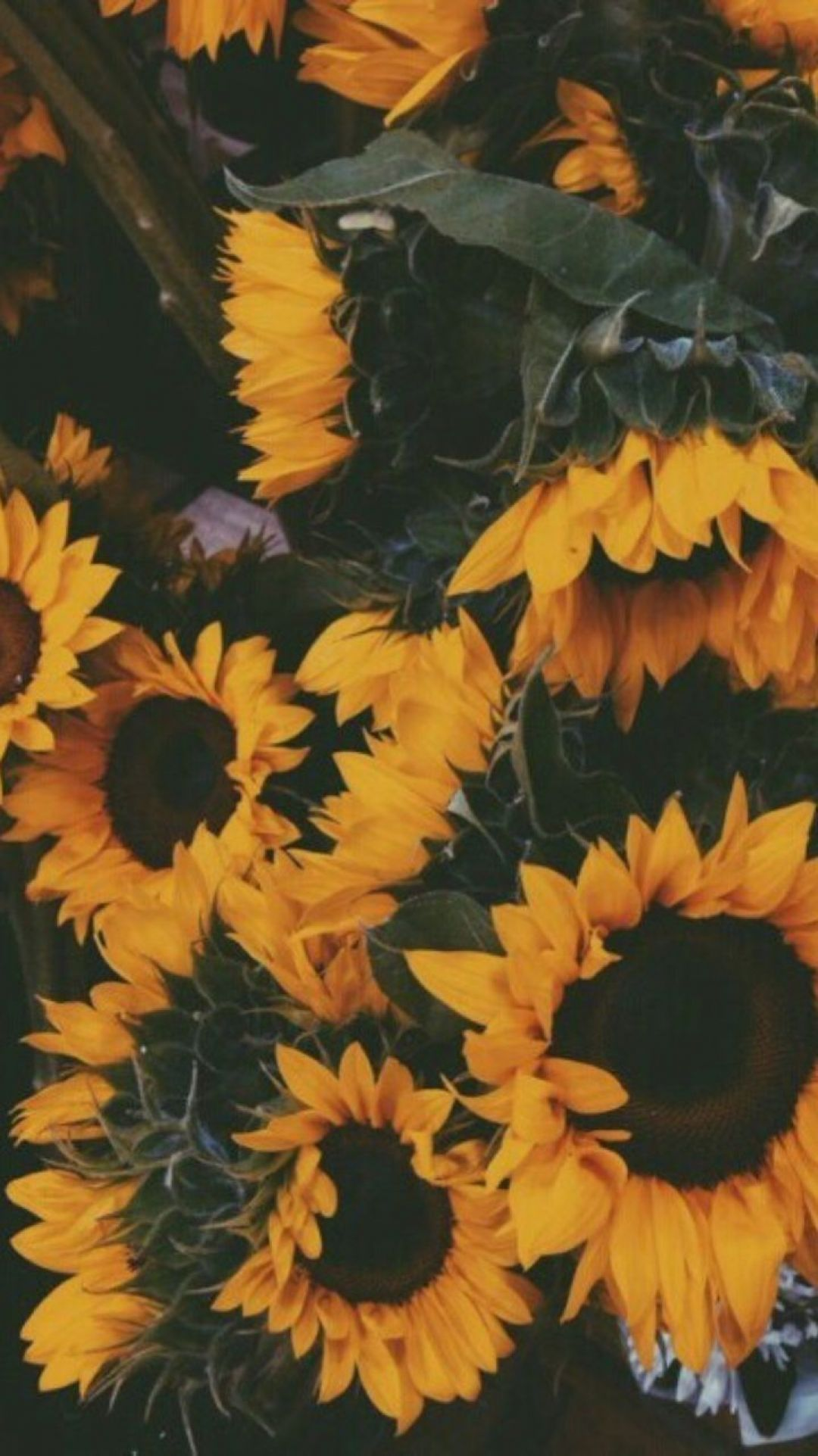 ✅[50+] Yellow Aesthetic Sunflowers HD Wallpapers