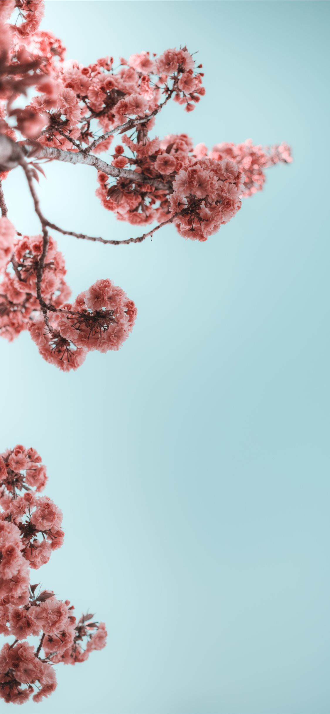 Spring Wallpaper Iphone 11 Pro Max Total Update