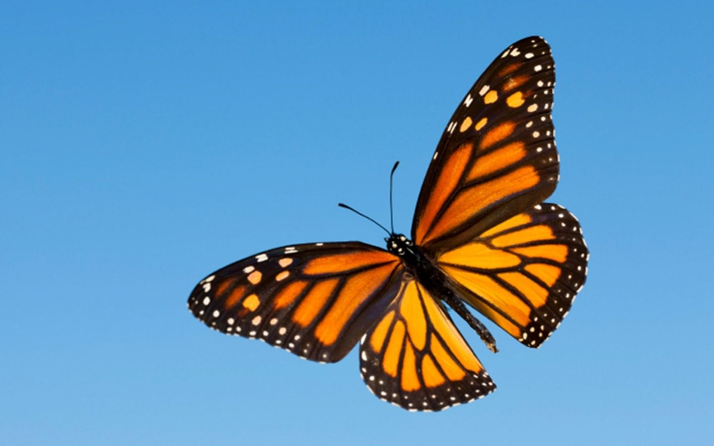 Monarch Butterfly Aesthetic Wallpapers - Wallpaper Cave