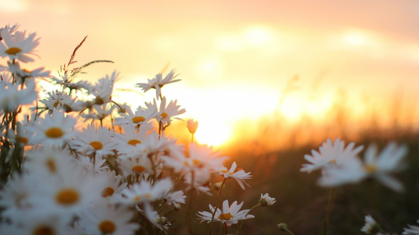 Aesthetic Spring Flowers Laptop Wallpapers Wallpaper Cave
