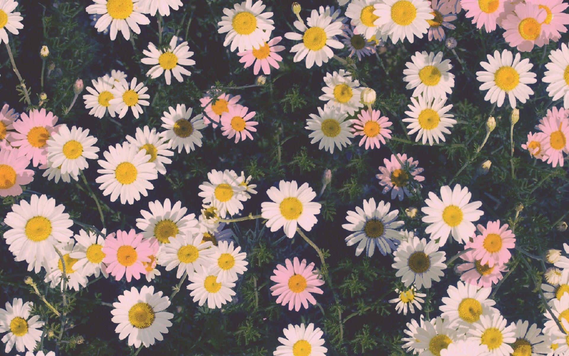 Tumblr Mac Free Wallpapers Wallpaper Cave