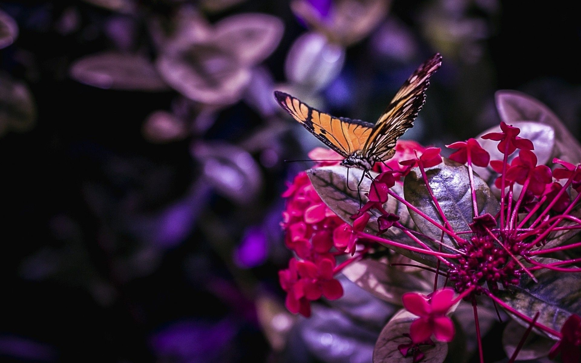 Butterfly Tumblr Wallpapers - Wallpaper Cave