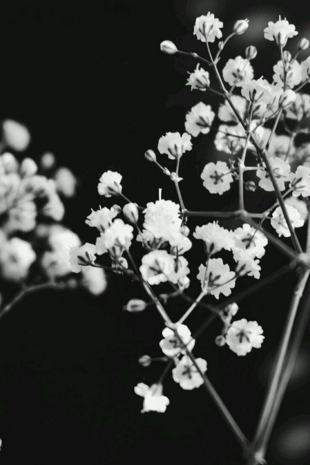 black and white aesthetic roses wallpapers