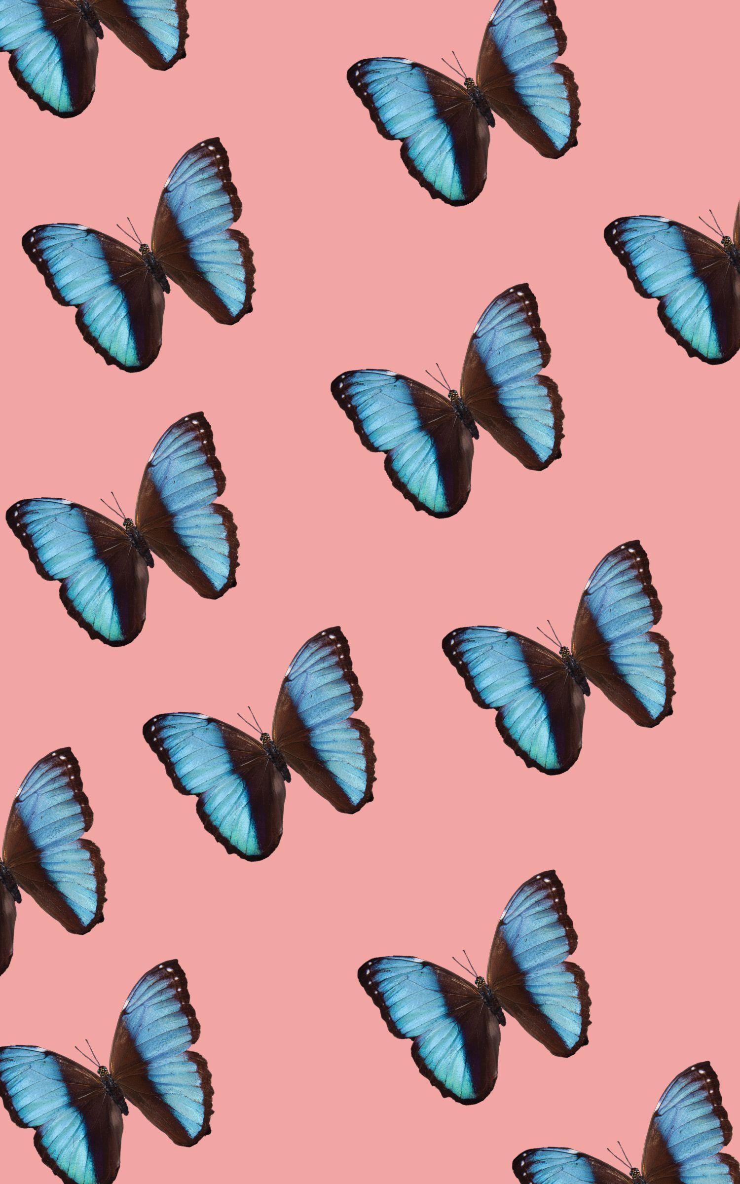 Vsco Butterfly Laptop Wallpapers Wallpaper Cave