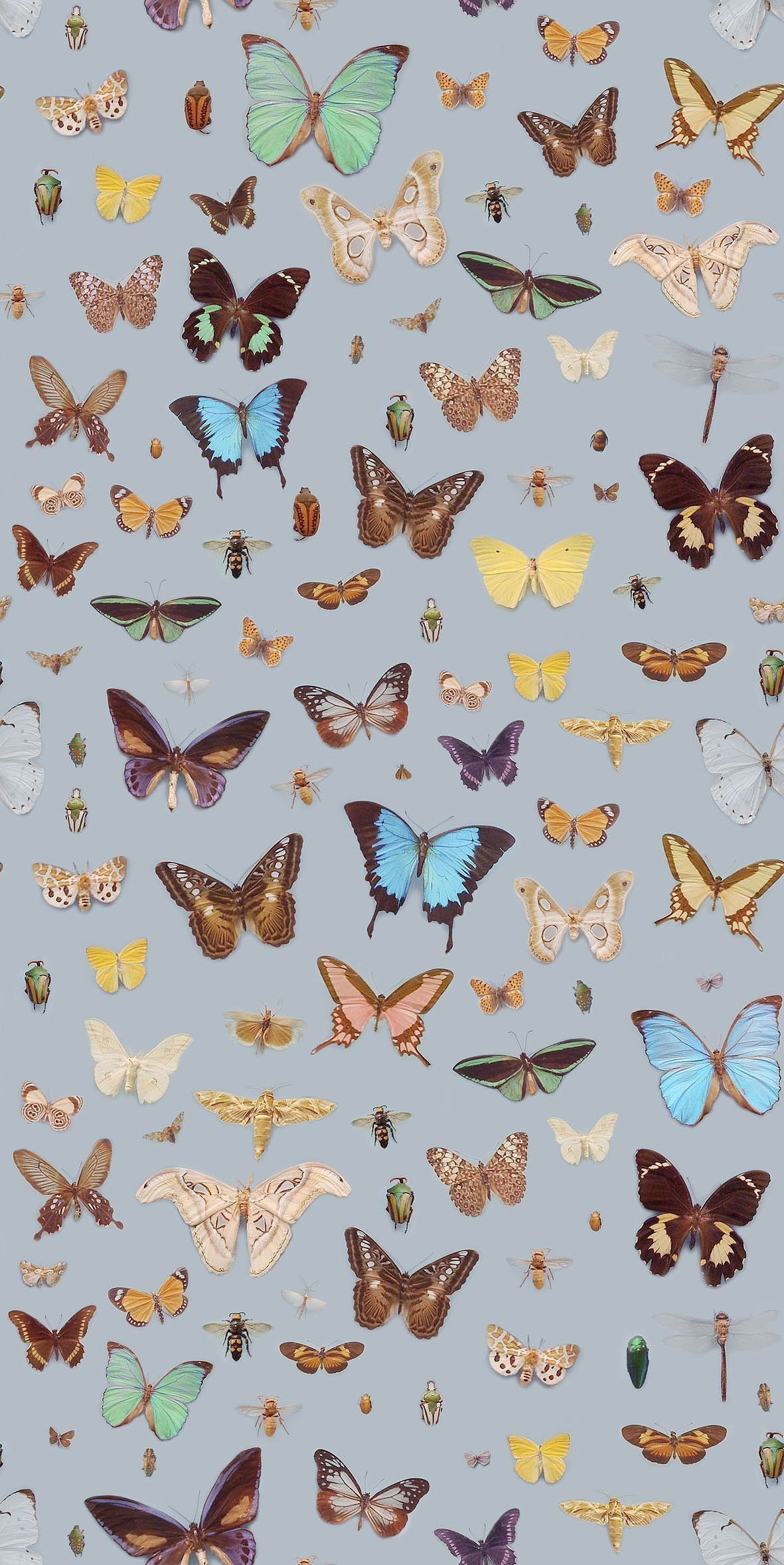 Butterfly Aesthetic Wallpapers Wallpaper Cave