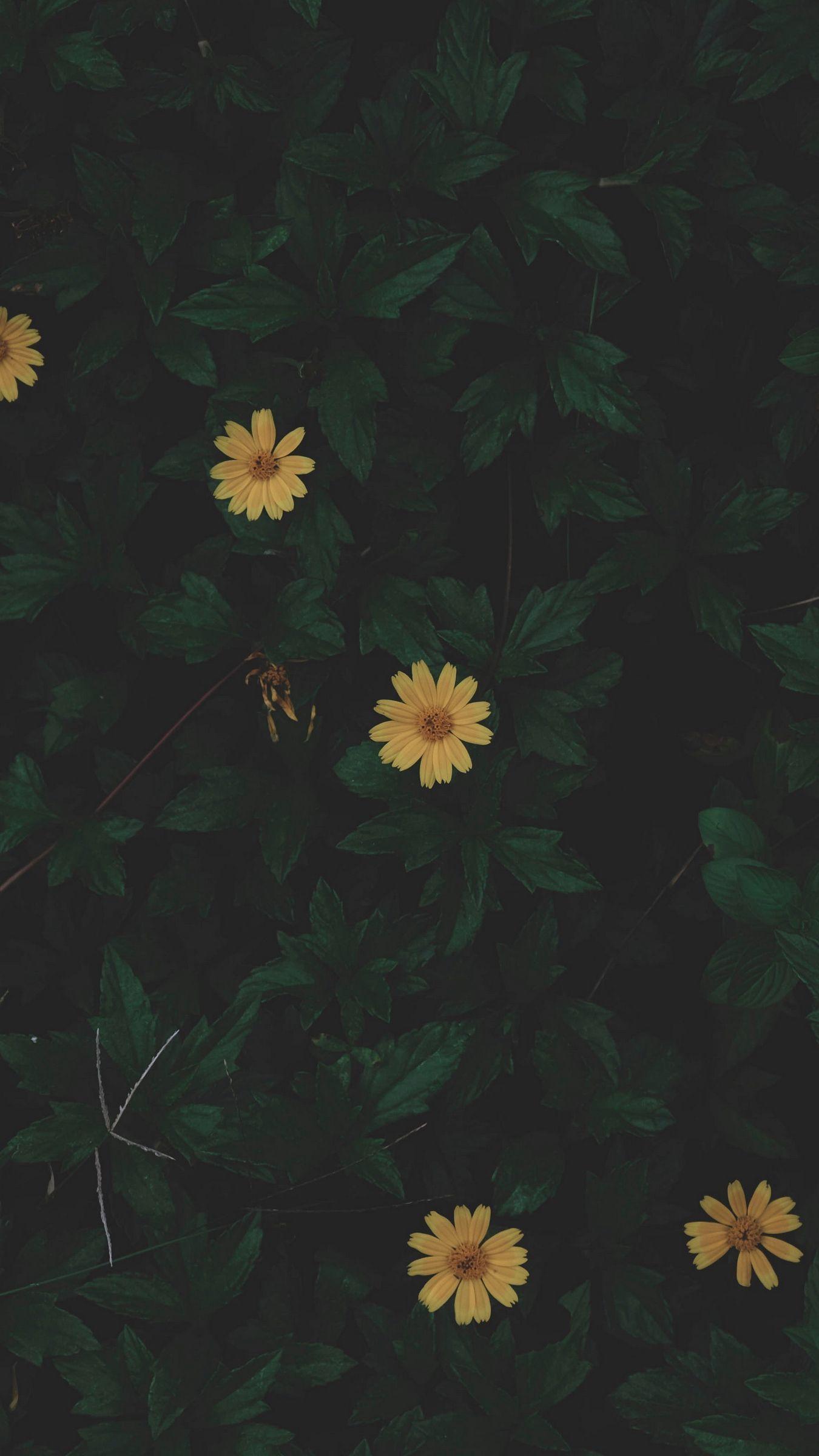 Dark Green iPhone Wallpapers - Wallpaper Cave