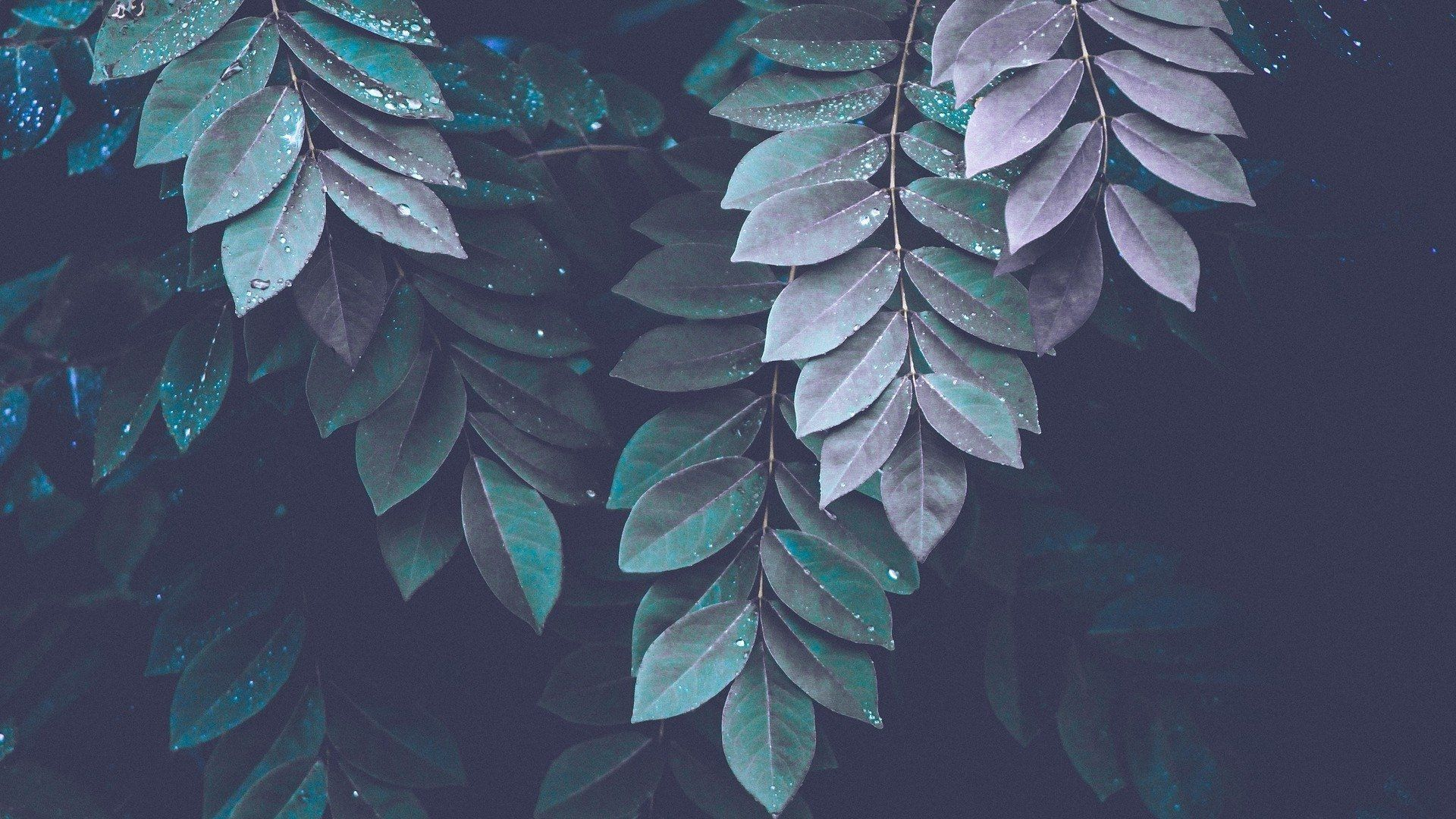 Plants Aesthetic Wallpapers - Wallpaper Cave