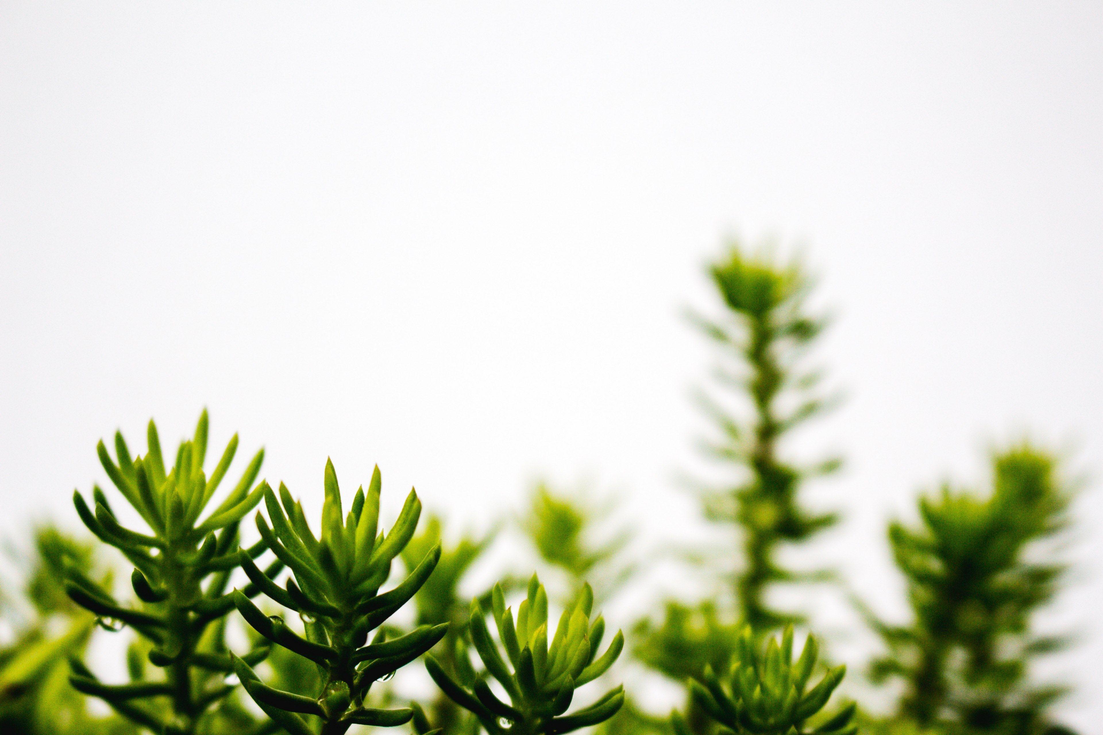 Clean Greenery Desktop Wallpapers - Wallpaper Cave