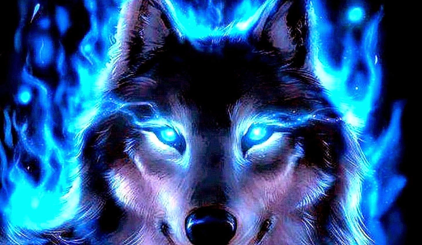 Blue Wolf Wallpapers Wallpaper Cave