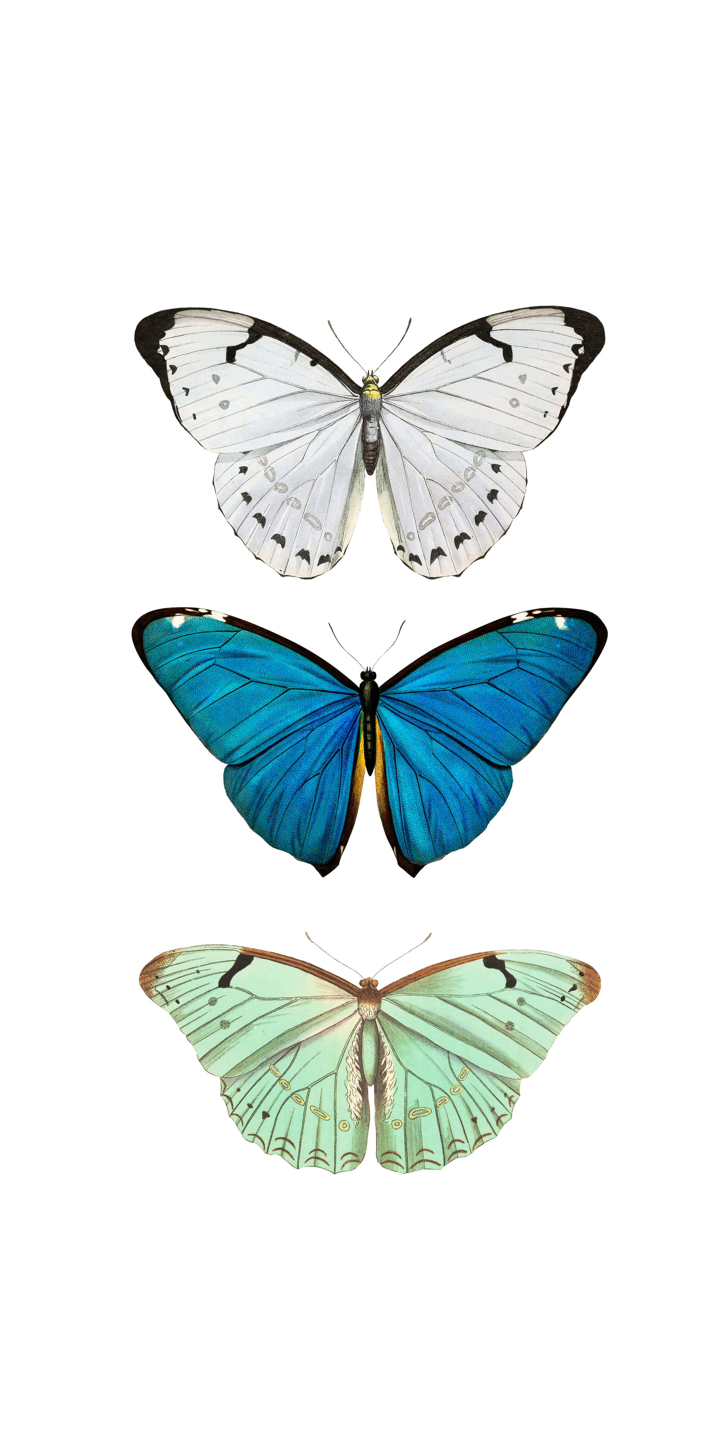 Aesthetic Butterfly Wallpaper For Iphone