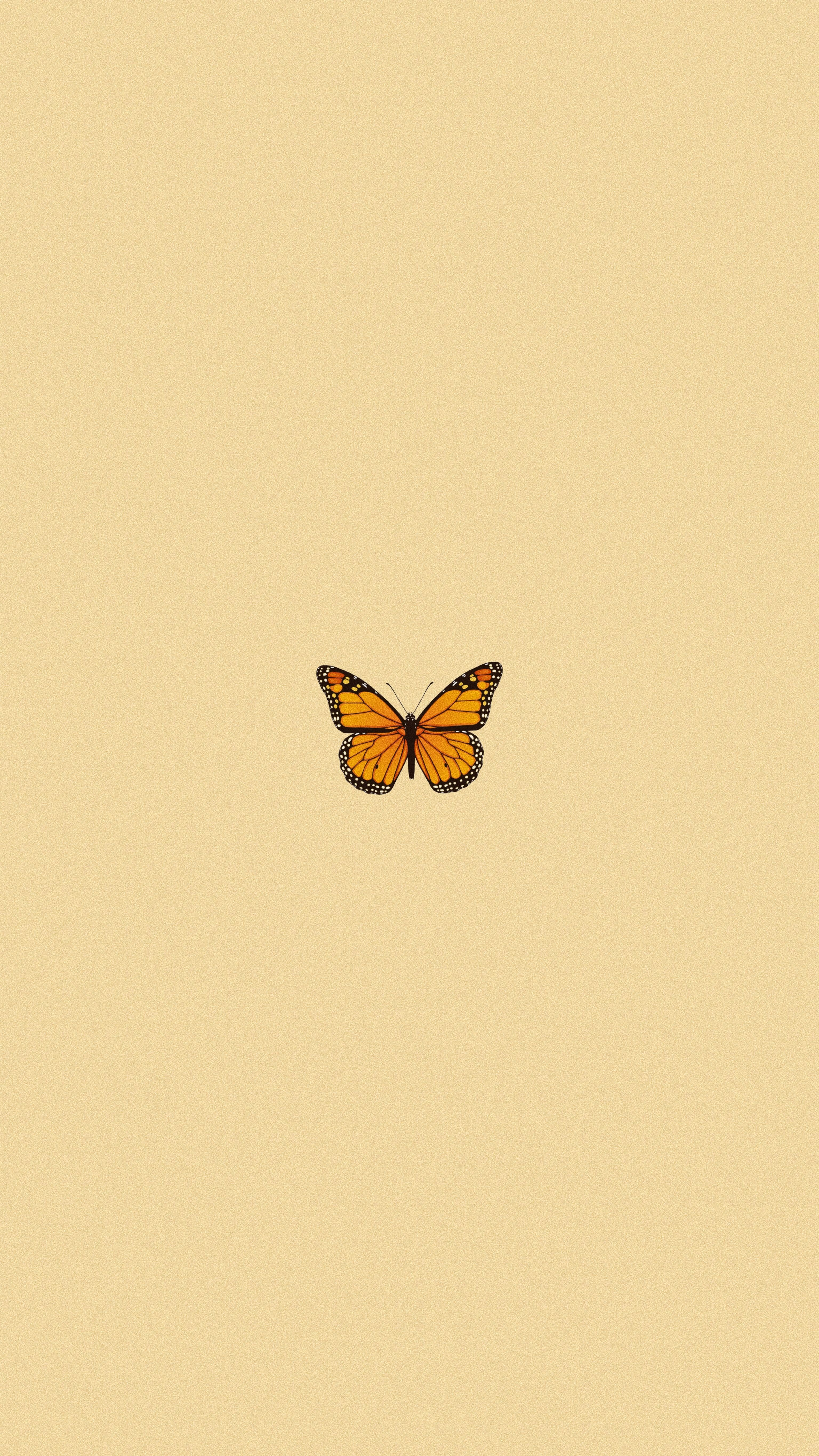 Aesthetic Simple Butterfly Wallpapers Wallpaper Cave