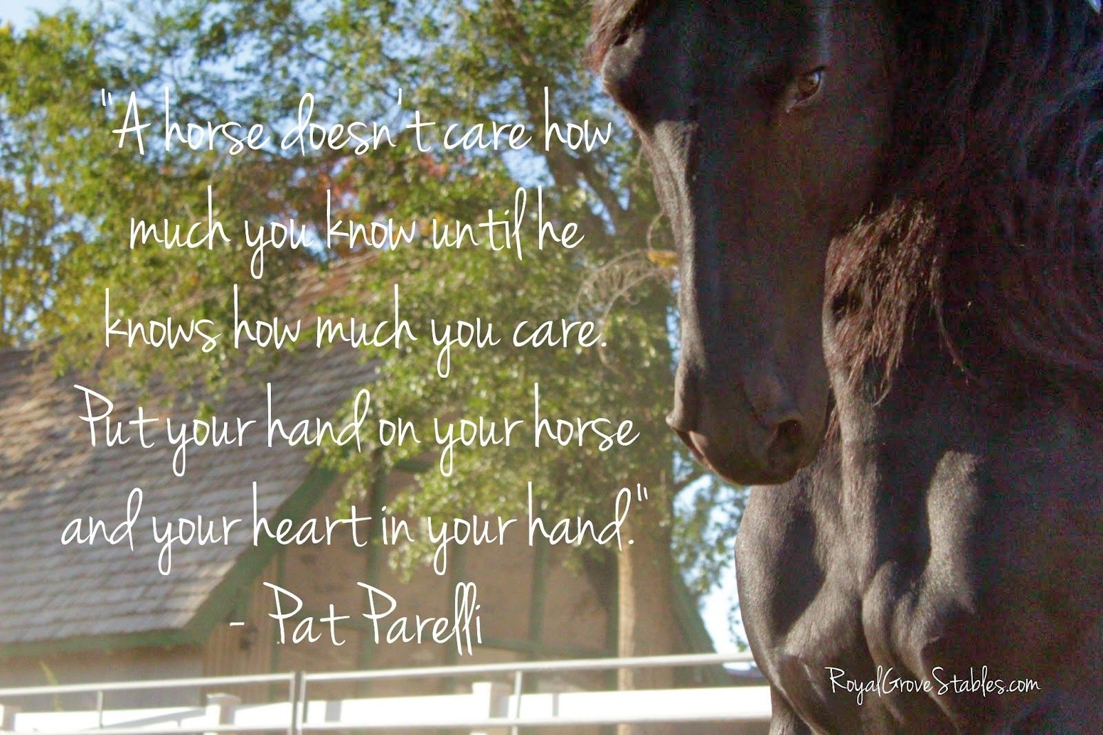 Horse Quotes Wallpapers Wallpaper Cave