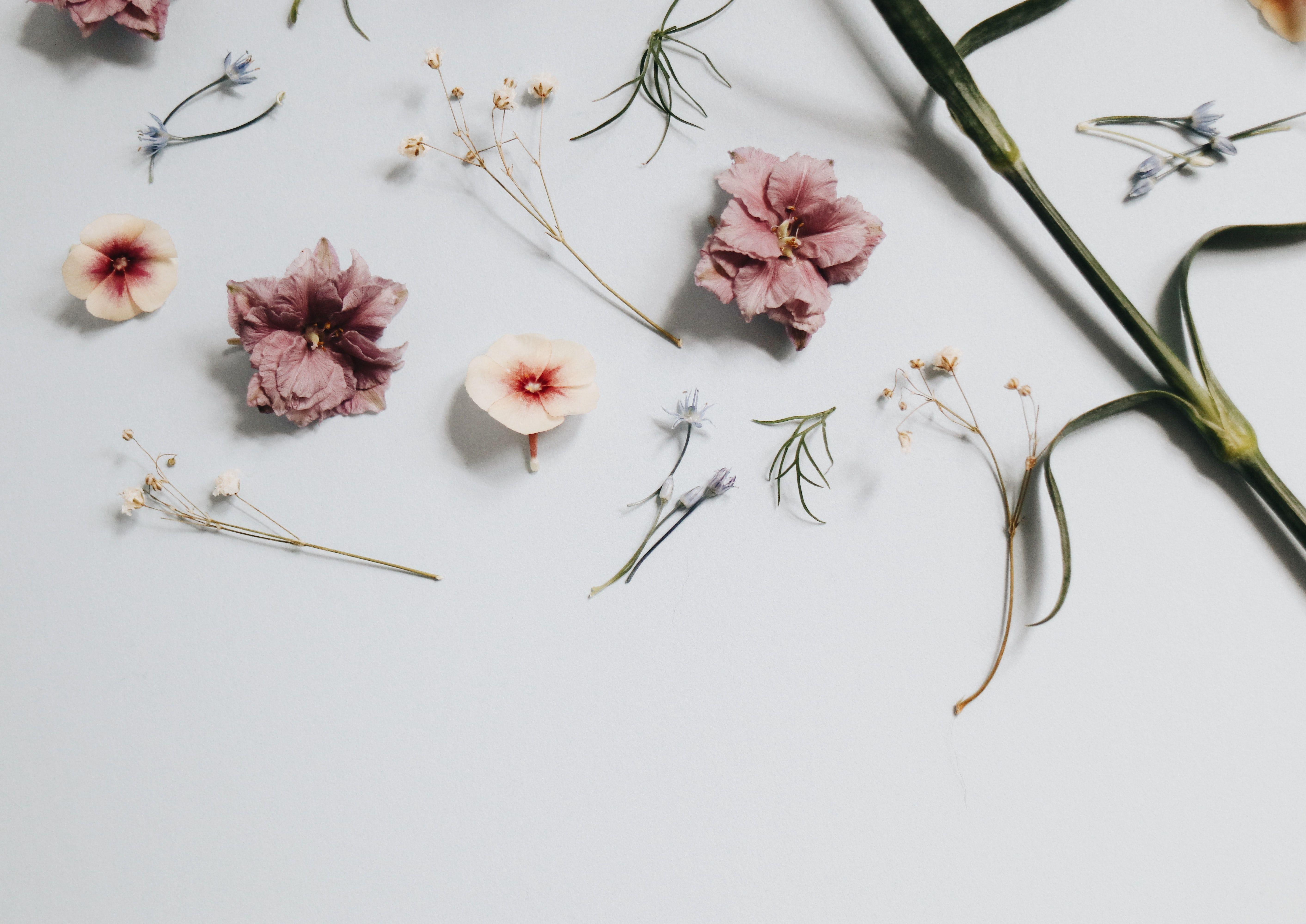 Minimalist Floral Laptop Wallpapers Wallpaper Cave