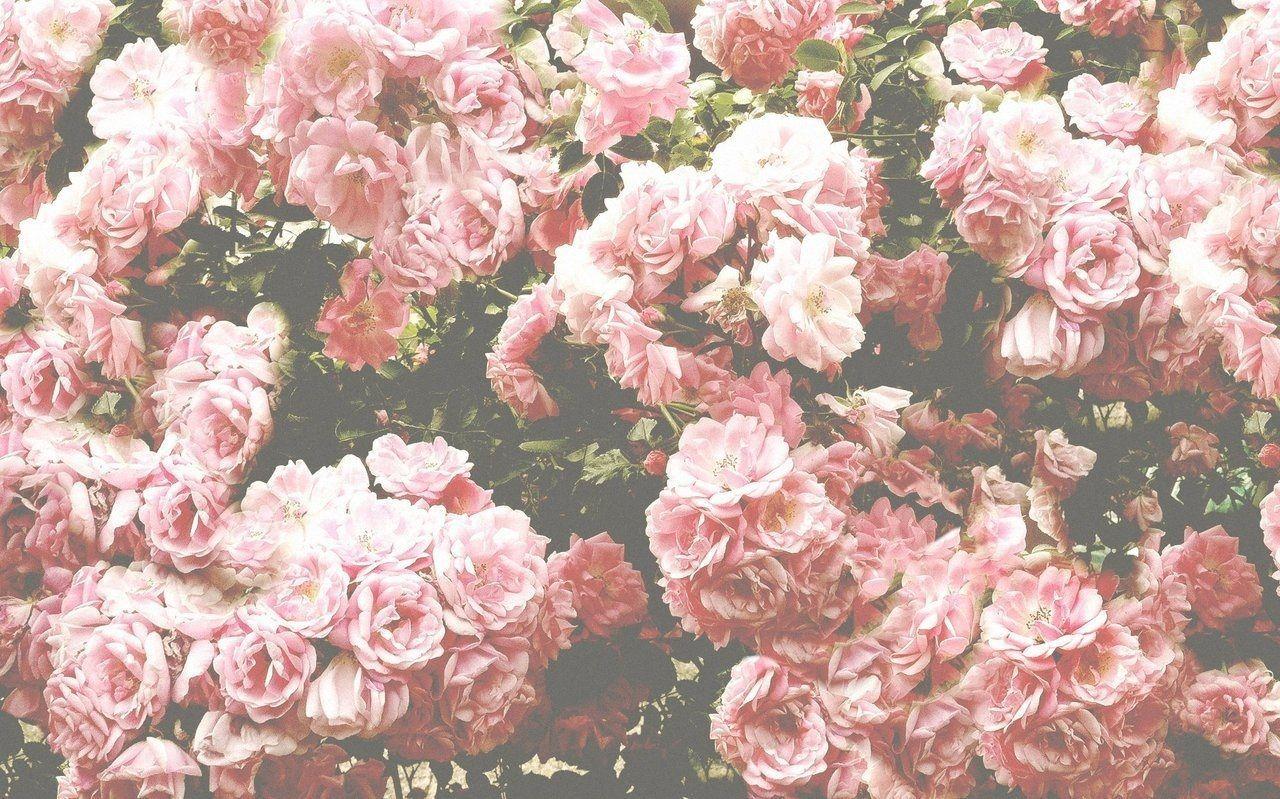 Aesthetic Horizontal Rose Wallpapers - Wallpaper Cave