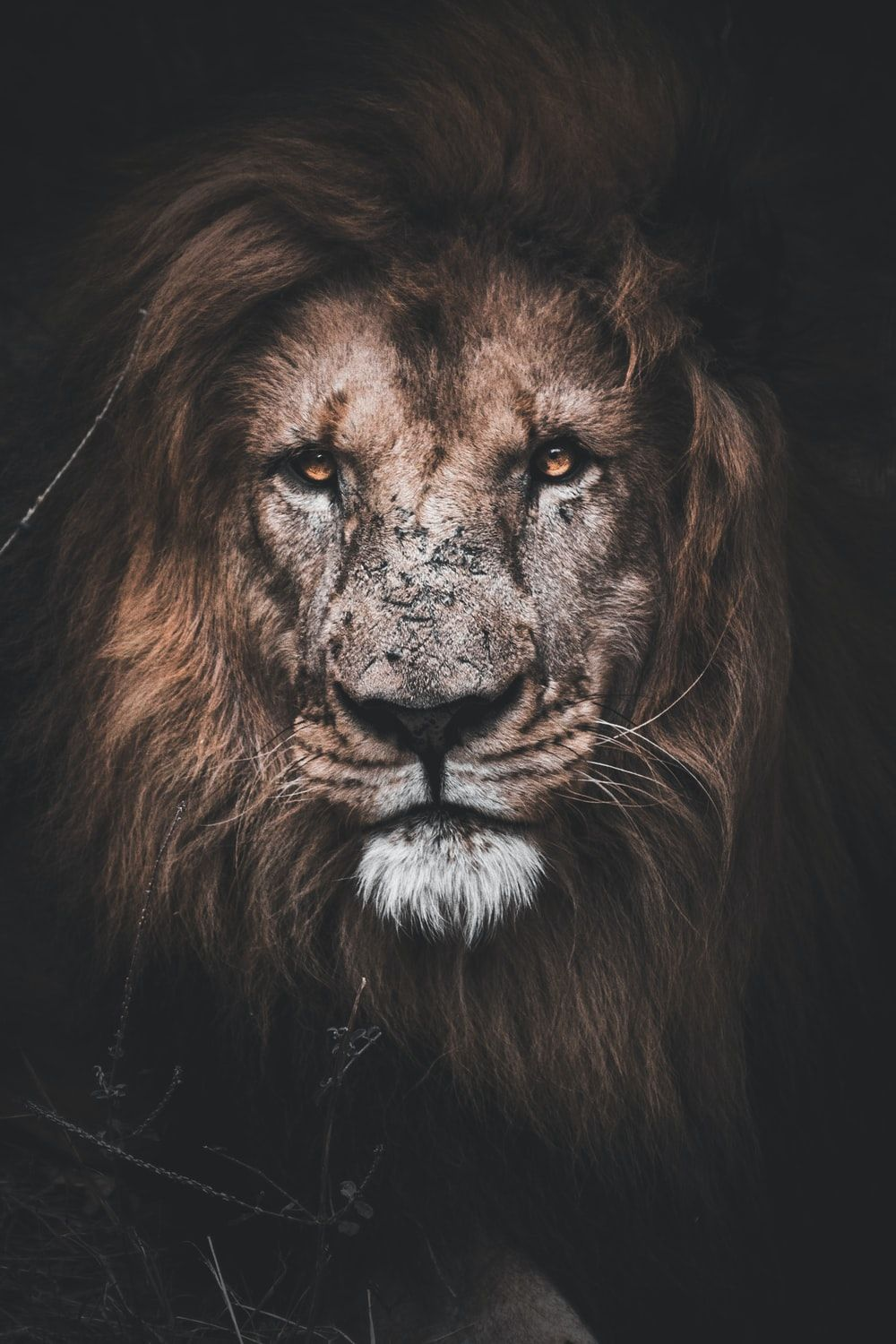 Lion Quotes Wallpapers Wallpaper Cave