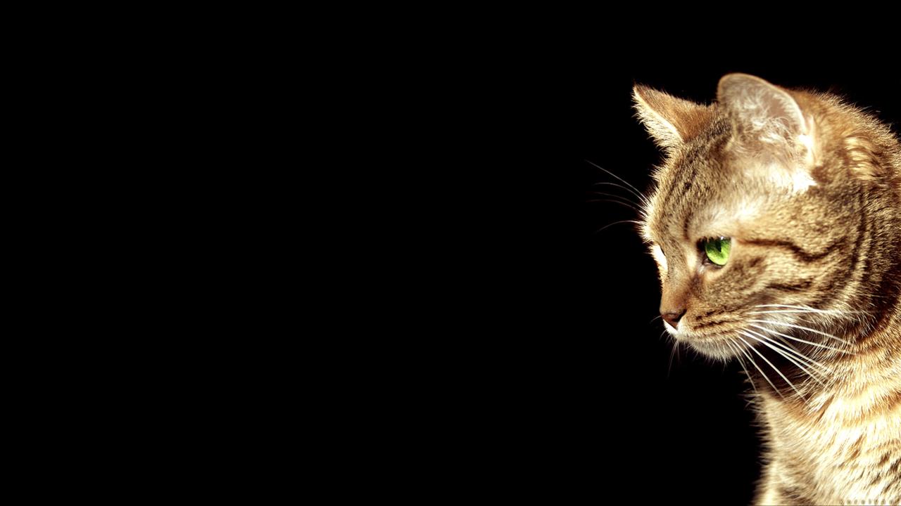Cats Tumblr Wallpapers Wallpaper Cave