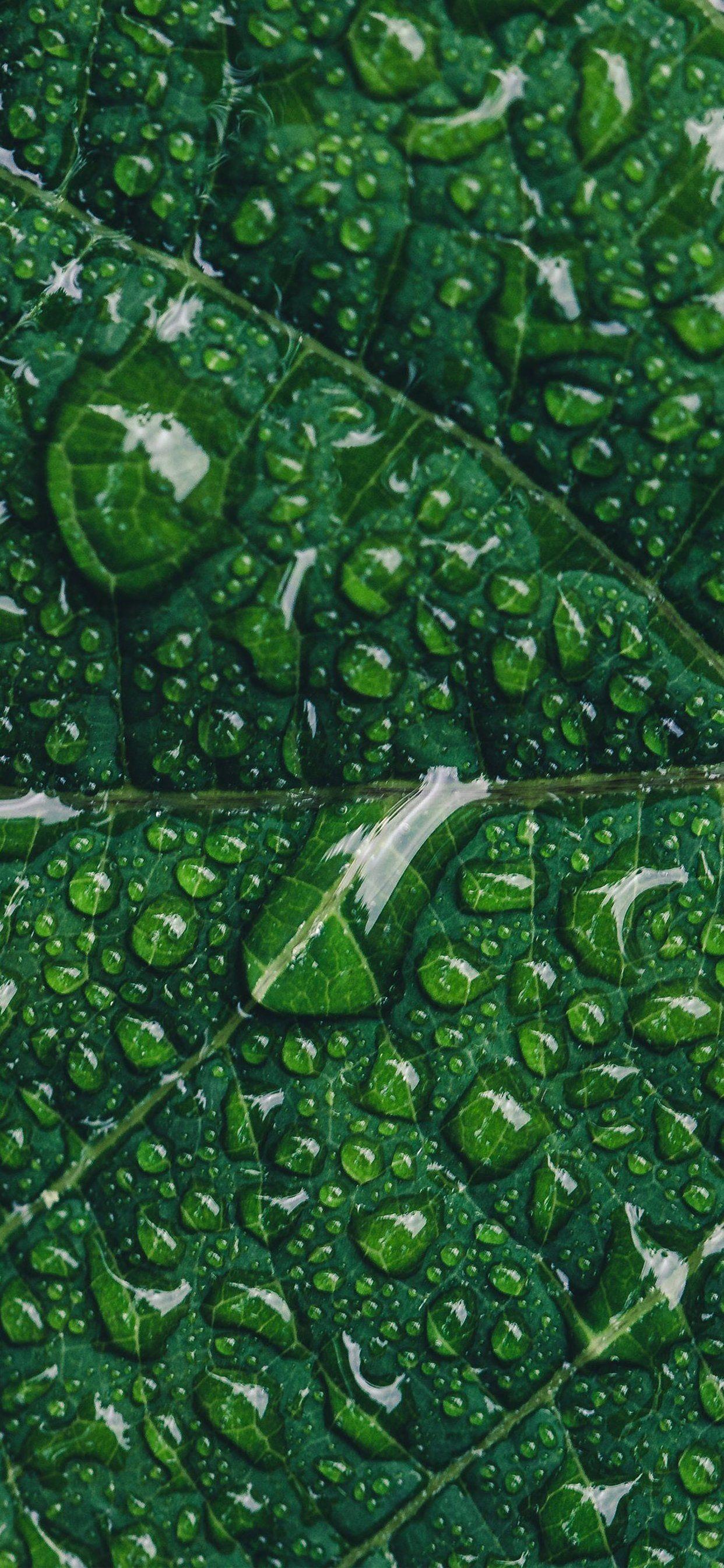 Nature Dark Green Aesthetic Wallpapers - Wallpaper Cave