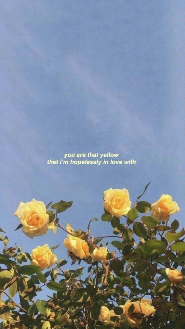 Quotes love tumblr Love Quotes