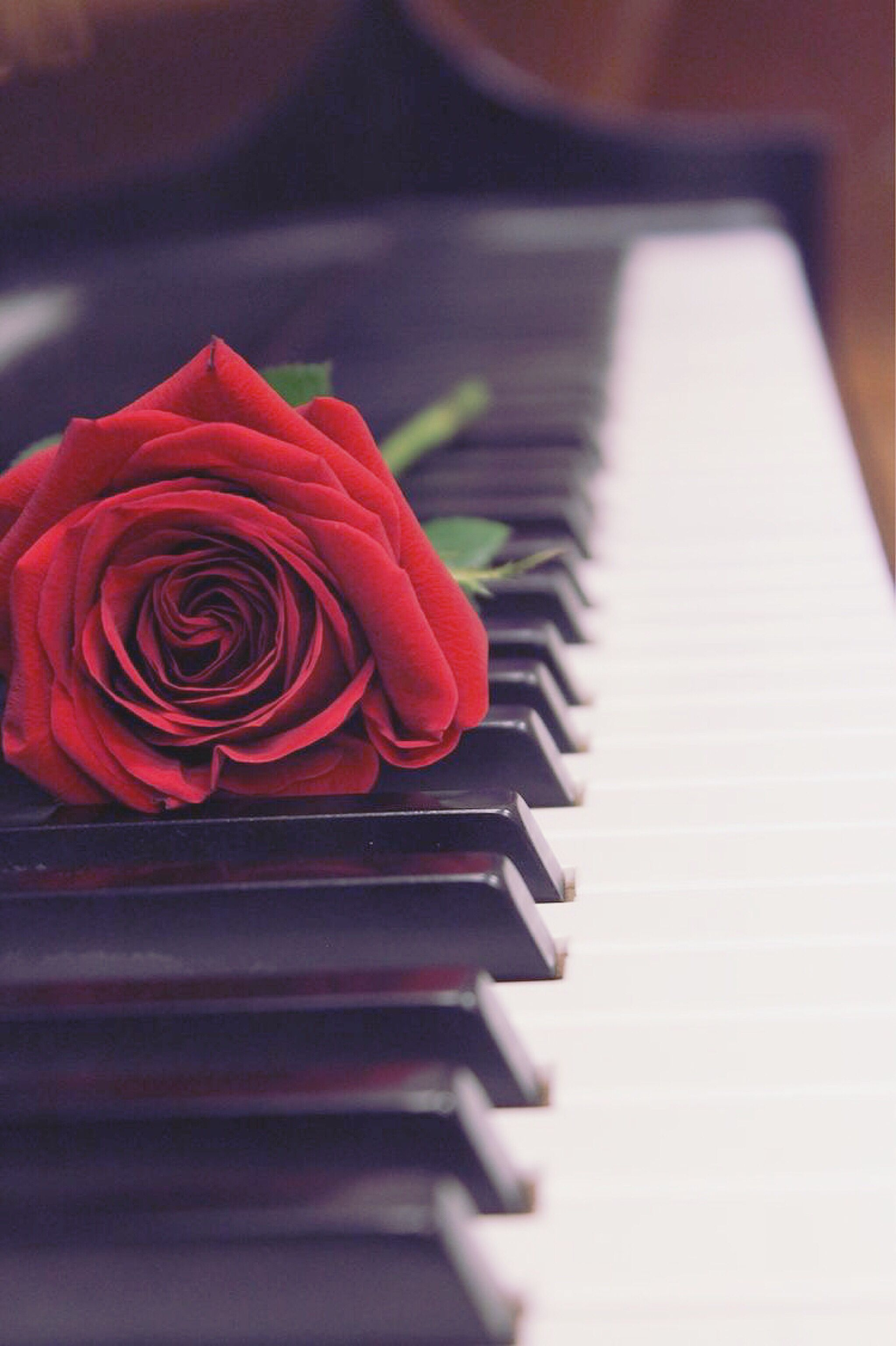 Piano Aesthetic Wallpapers Wallpaper Cave