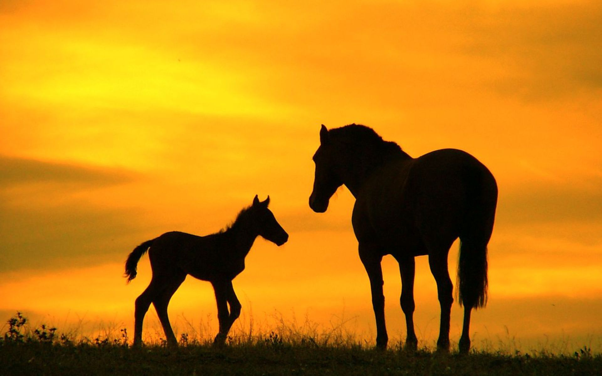 Family, horses, cartoon, image, lists, black, ranch, pictures