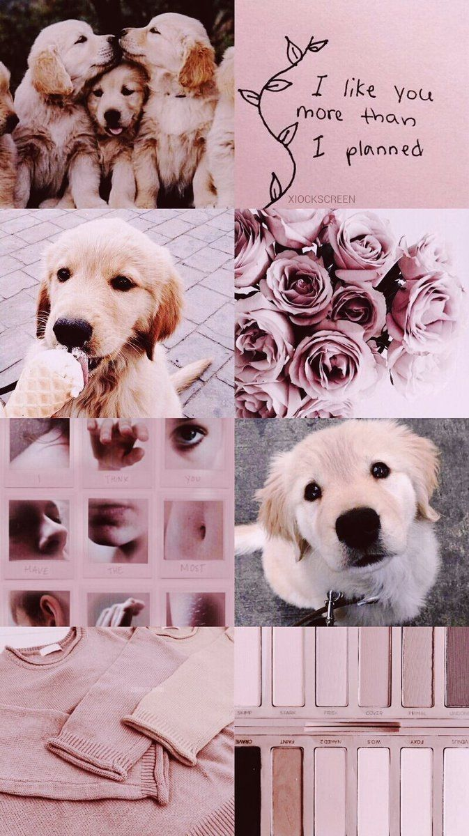 Cute Aesthetic Dog Wallpapers Wallpaper Cave