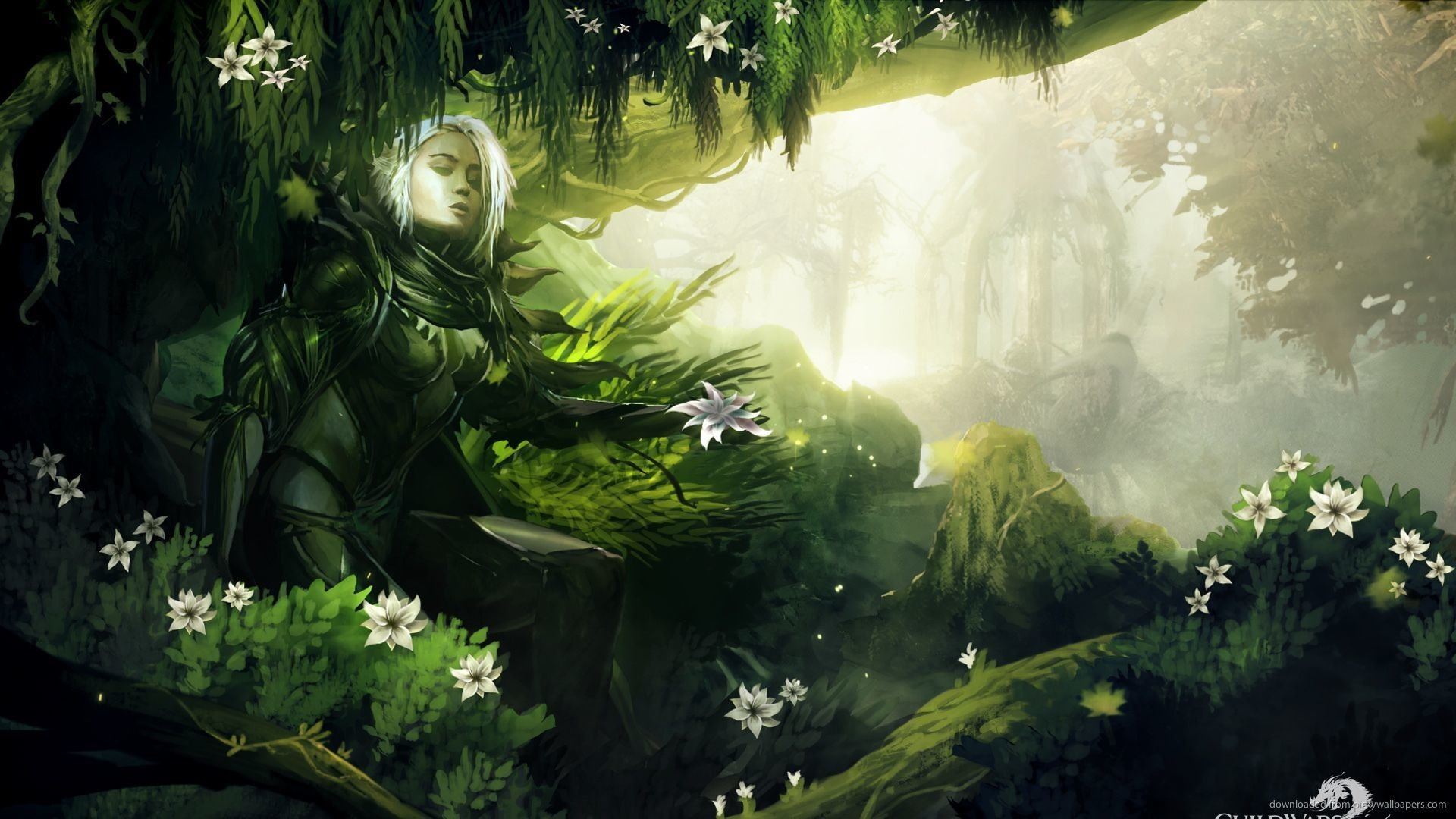 Forest Elf Wallpapers Wallpaper Cave
