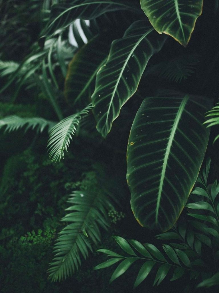 Plants Aesthetic Wallpapers Wallpaper Cave