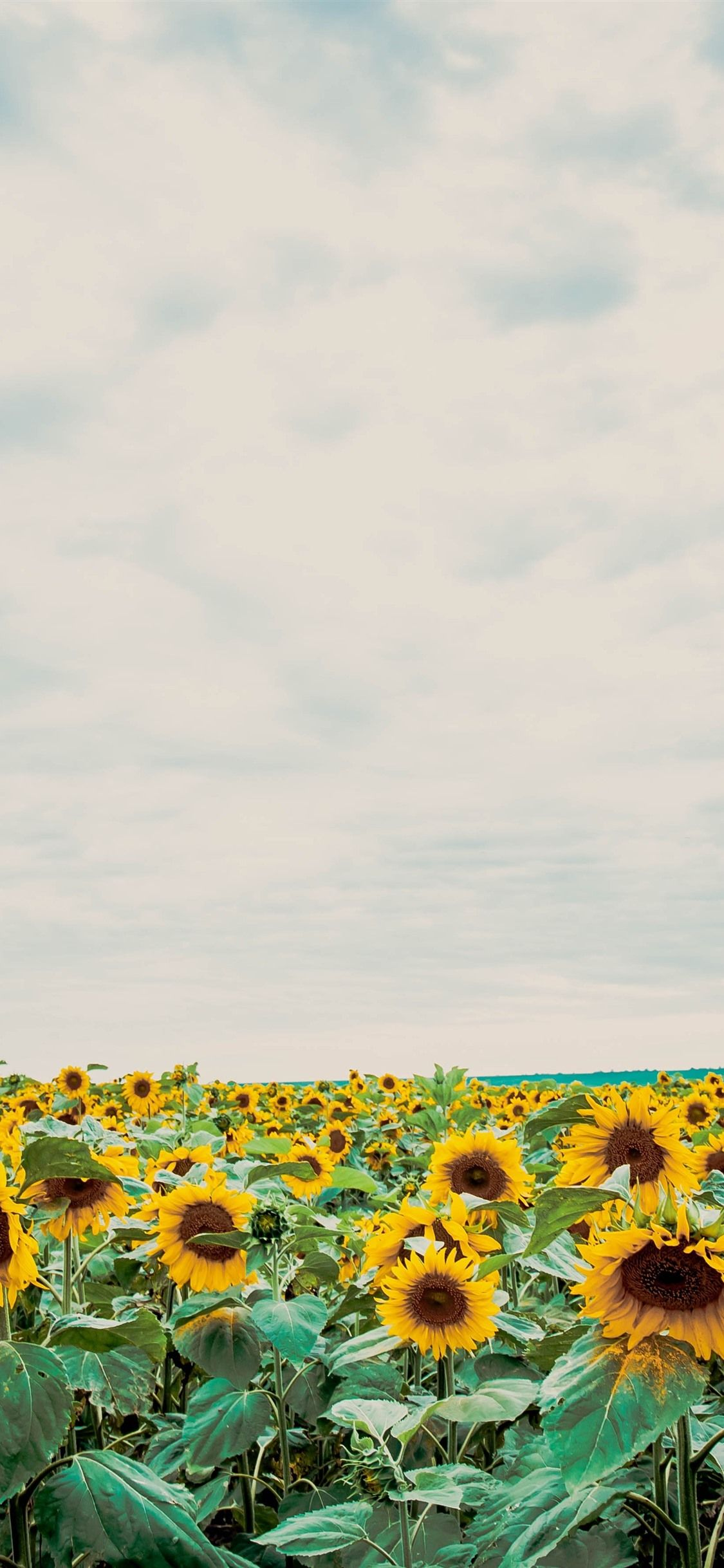 Clouds Sunflower Aesthetic Wallpapers - Wallpaper Cave