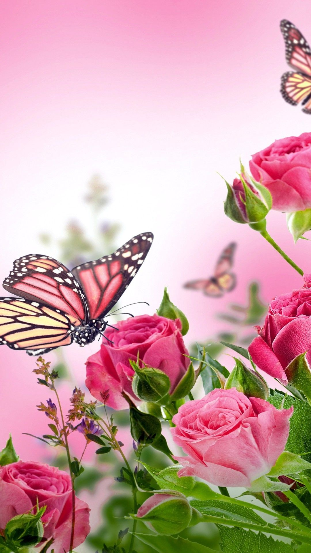 Butterfly HD Mobile Wallpapers - Wallpaper Cave