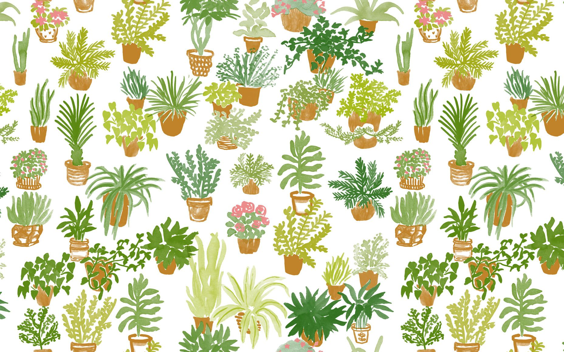 Plants Tumblr Wallpapers Wallpaper Cave